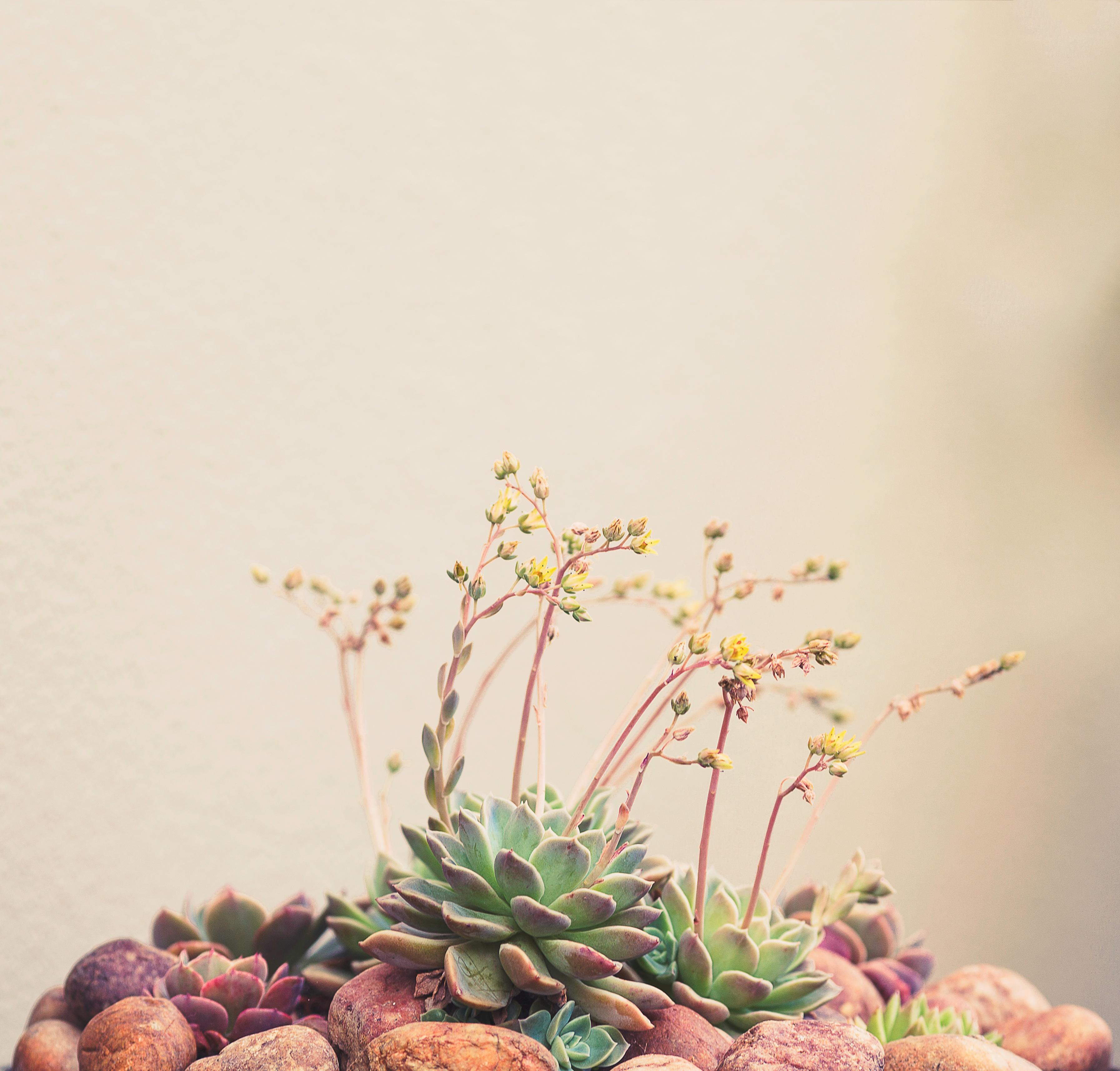 Fotoğraf şube çiçek Bahar üretmek Bitki örtüsü Boyama Sanat
