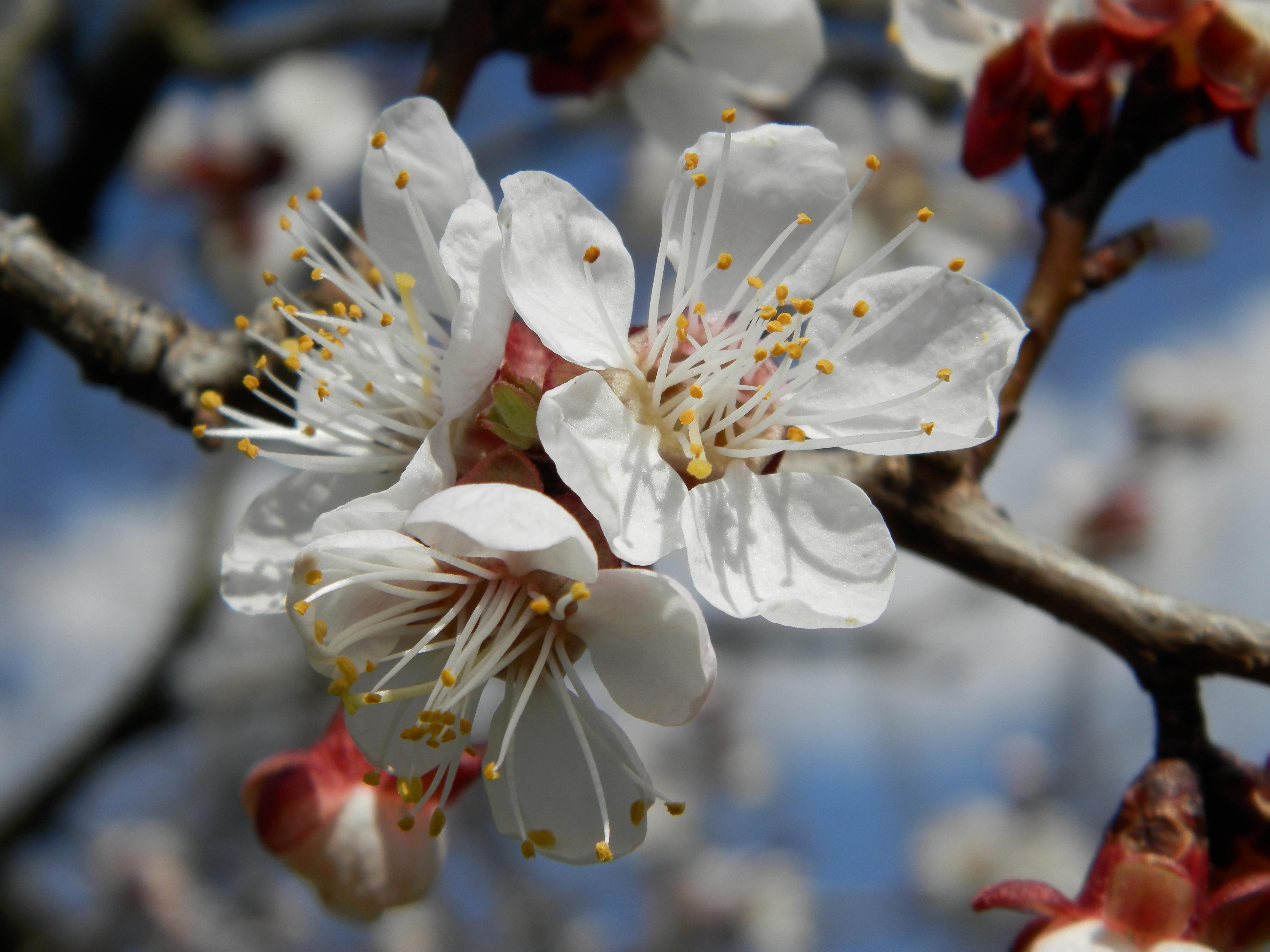 Цветы фото в саду что посадить деловой