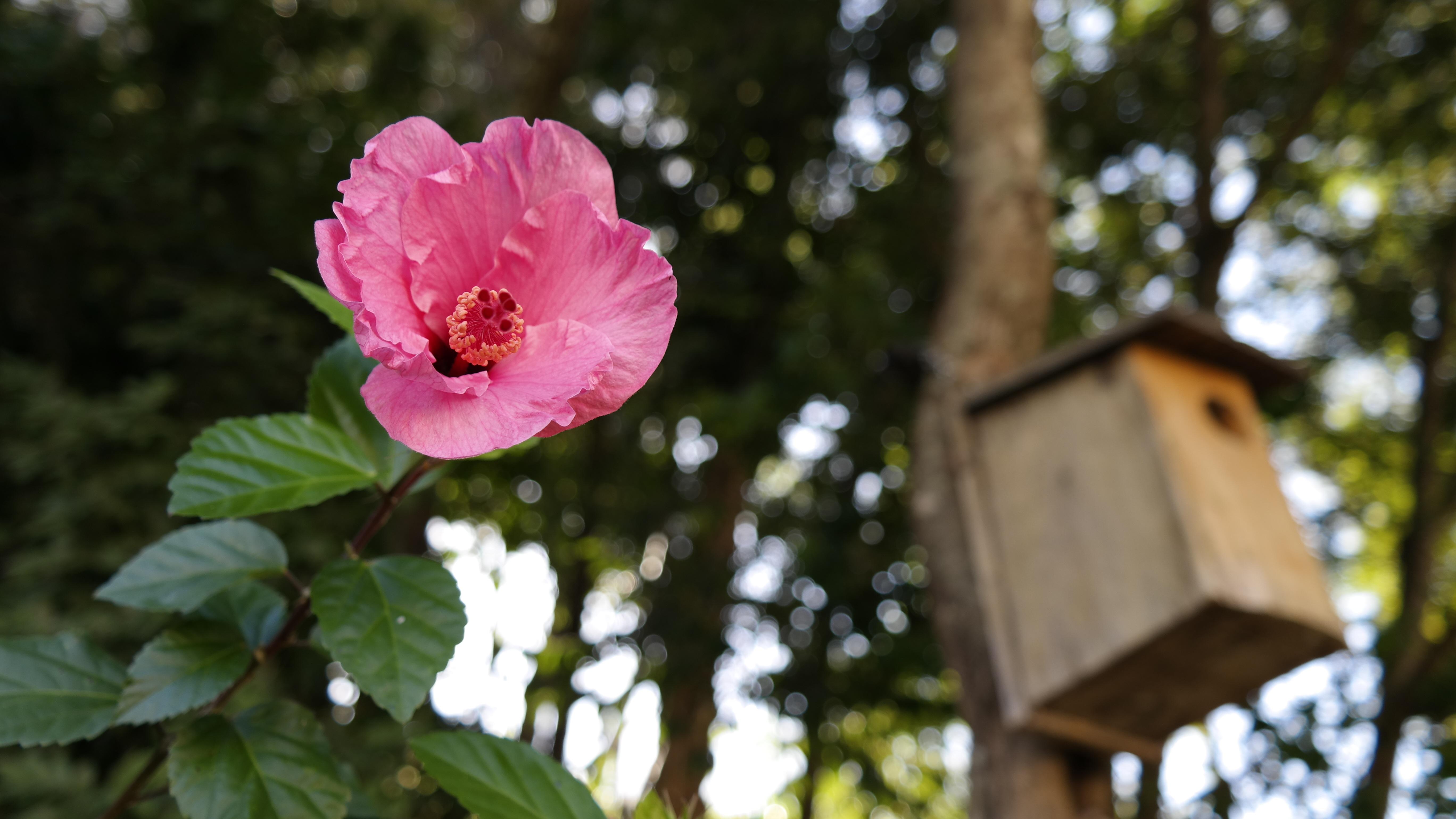 foto de Images Gratuites : branche, fleur, feuille, Floraison, printemps ...