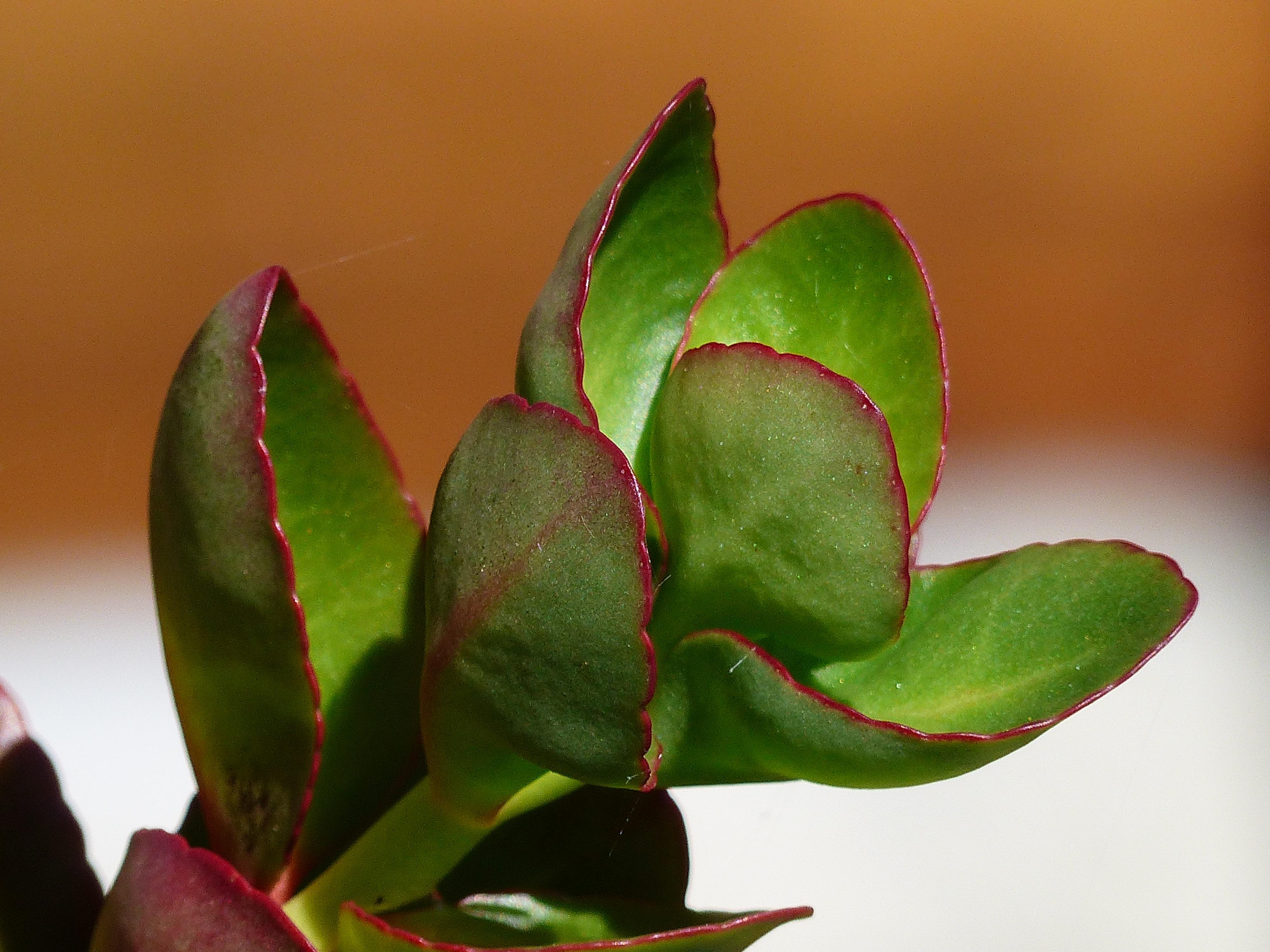 free images branch blossom leaf flower petal green red