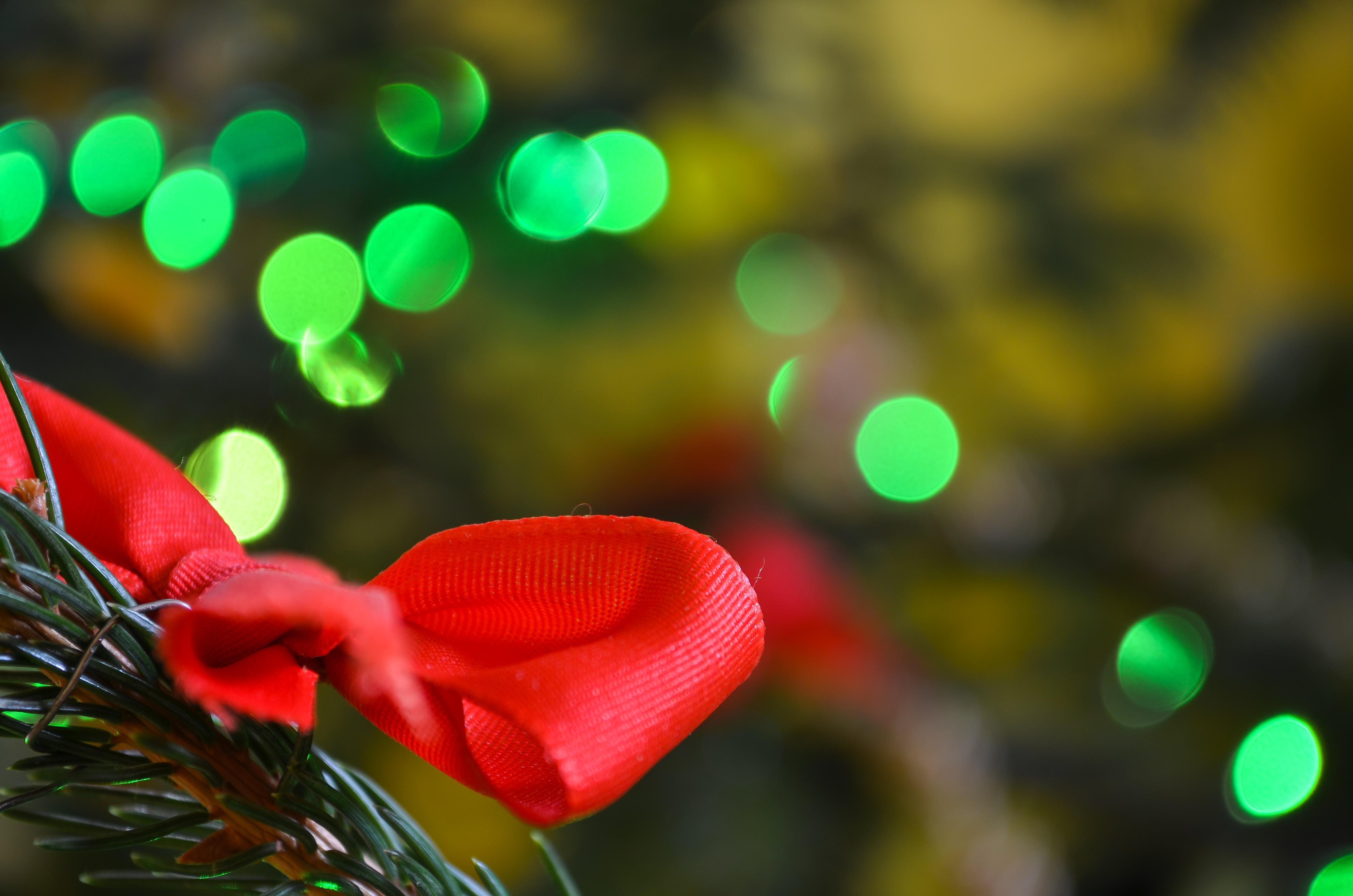 Free Images : branch, blossom, plant, leaf, flower, petal, red ...