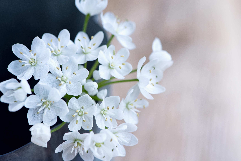 человек картинки цветы белого цвета мастер-классы созданию