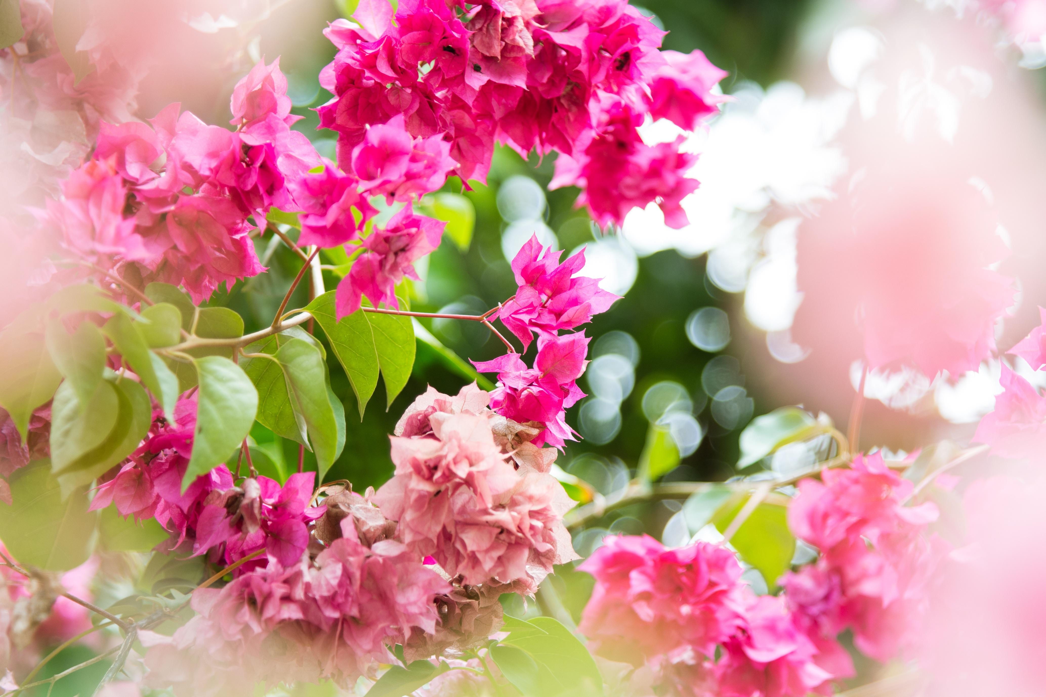 Gambar Cabang Mekar Menanam Putih Daun Bunga Musim