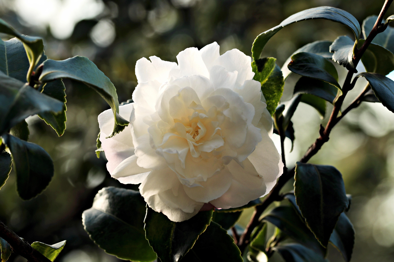 Images Gratuites Branche Blanc Feuille Petale Floraison