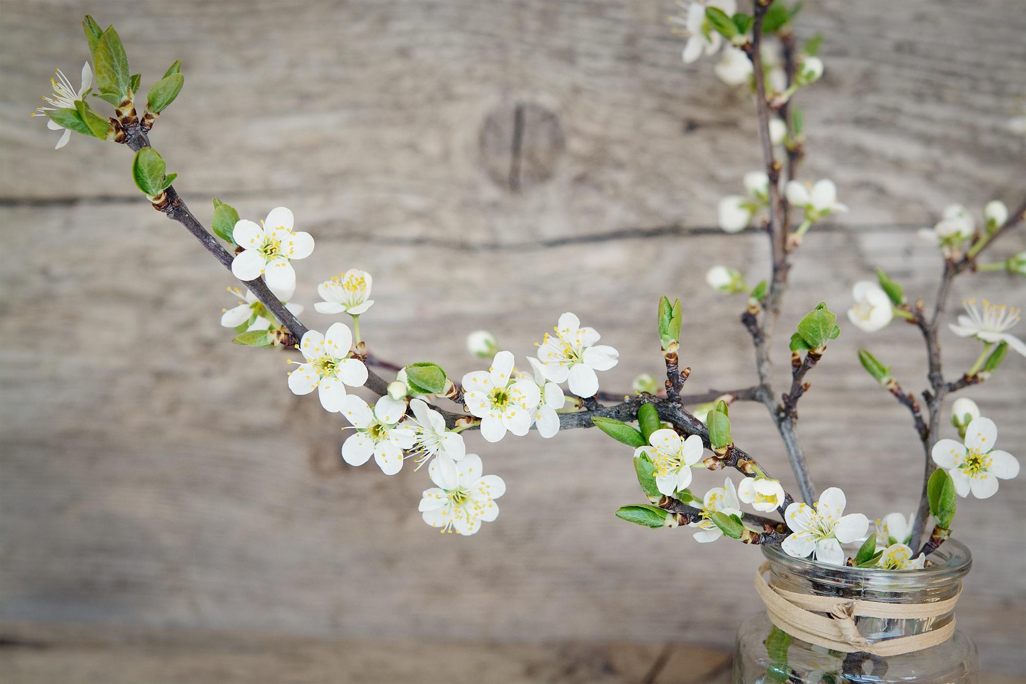 протяжении картинки весенних веточек и цветов тубус, гарантирует