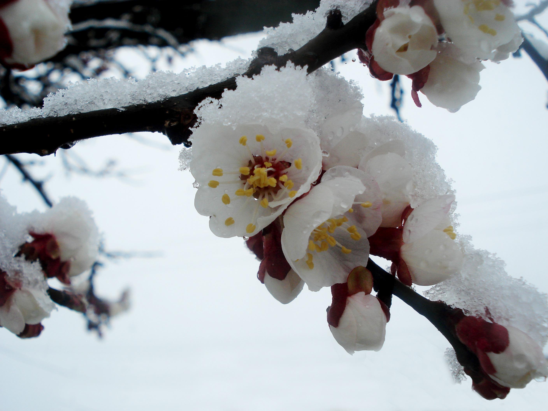 Цветок утренняя зорька фото