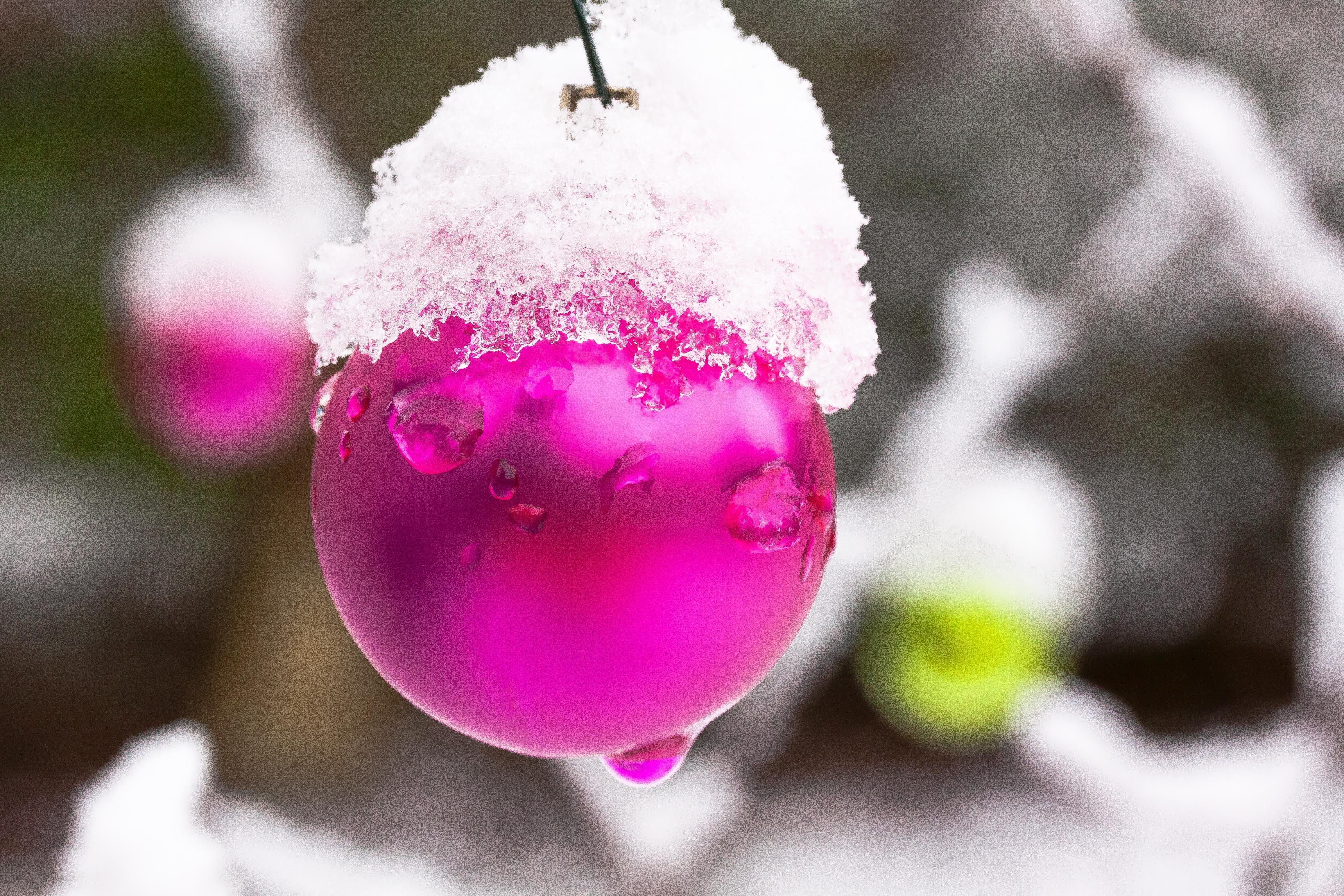 Christbaumkugeln Rose.Images Gratuites Branche Fleur Neige Du Froid Hiver