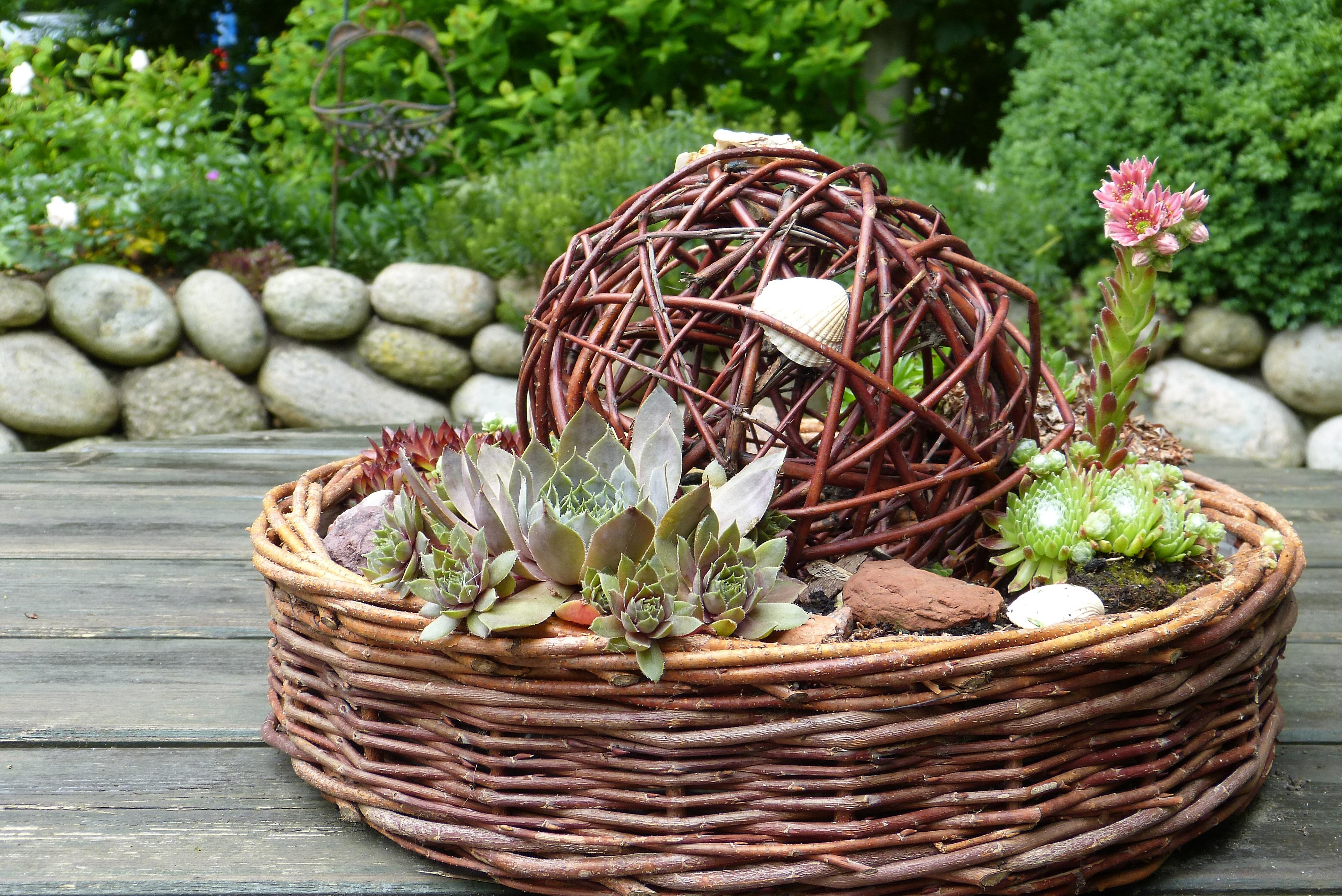 Kostenlose Foto Ast Kaktus Pflanze Holz Blume