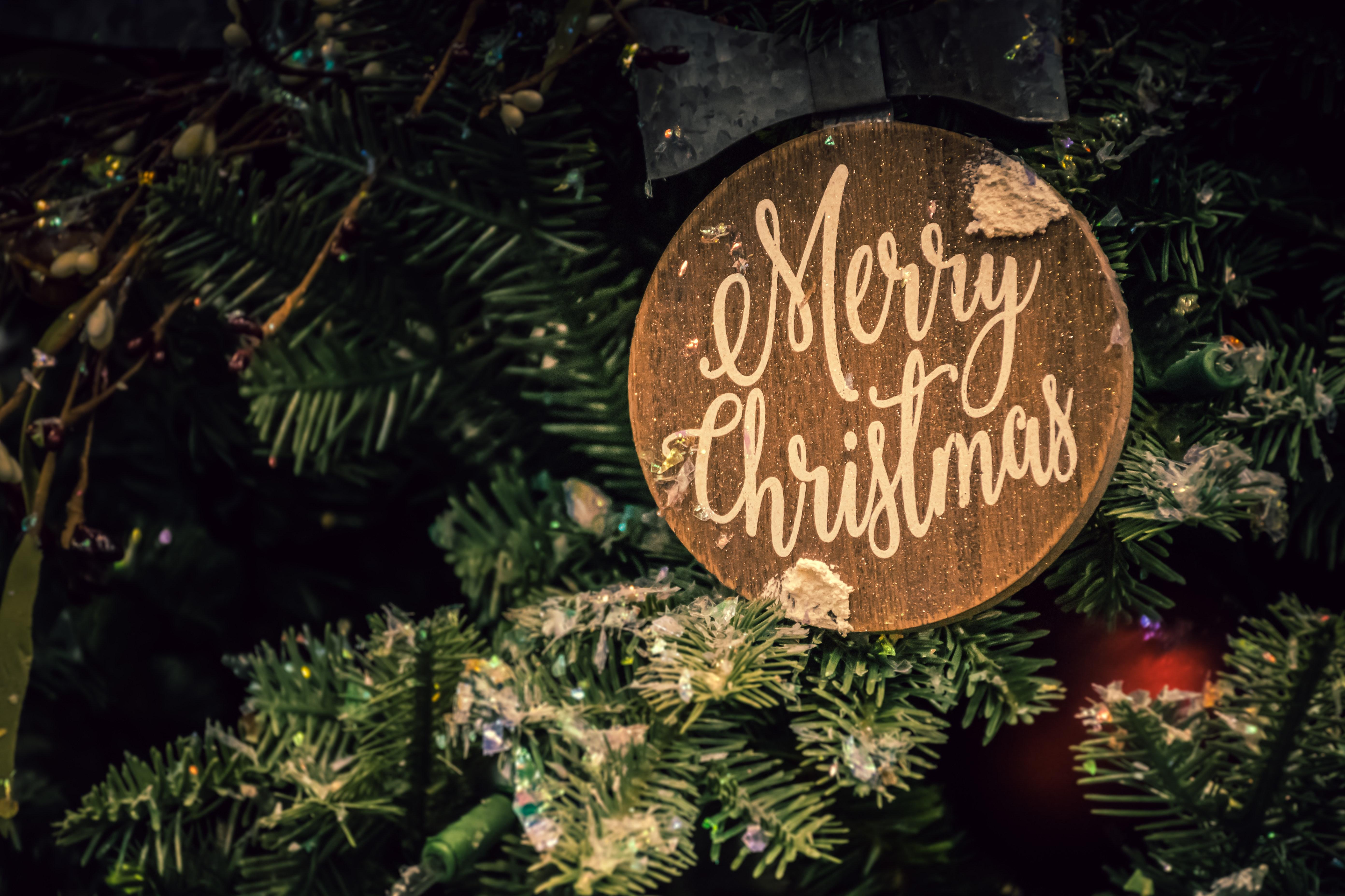 Fotos Gratis Rama Celebracion Decoración De Navidad
