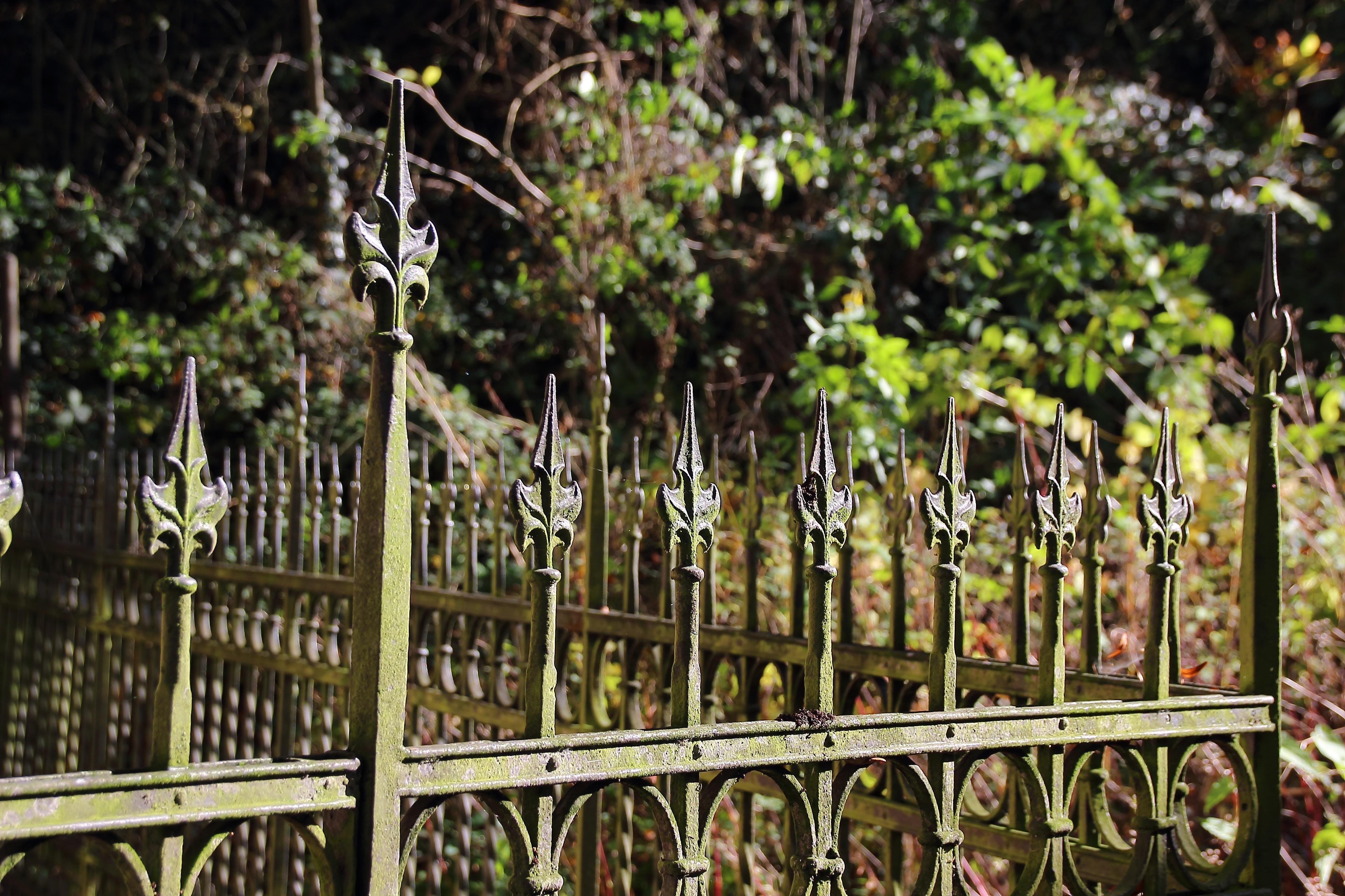 Kostenlose foto Ast Zaun Blume alt Metall Garten