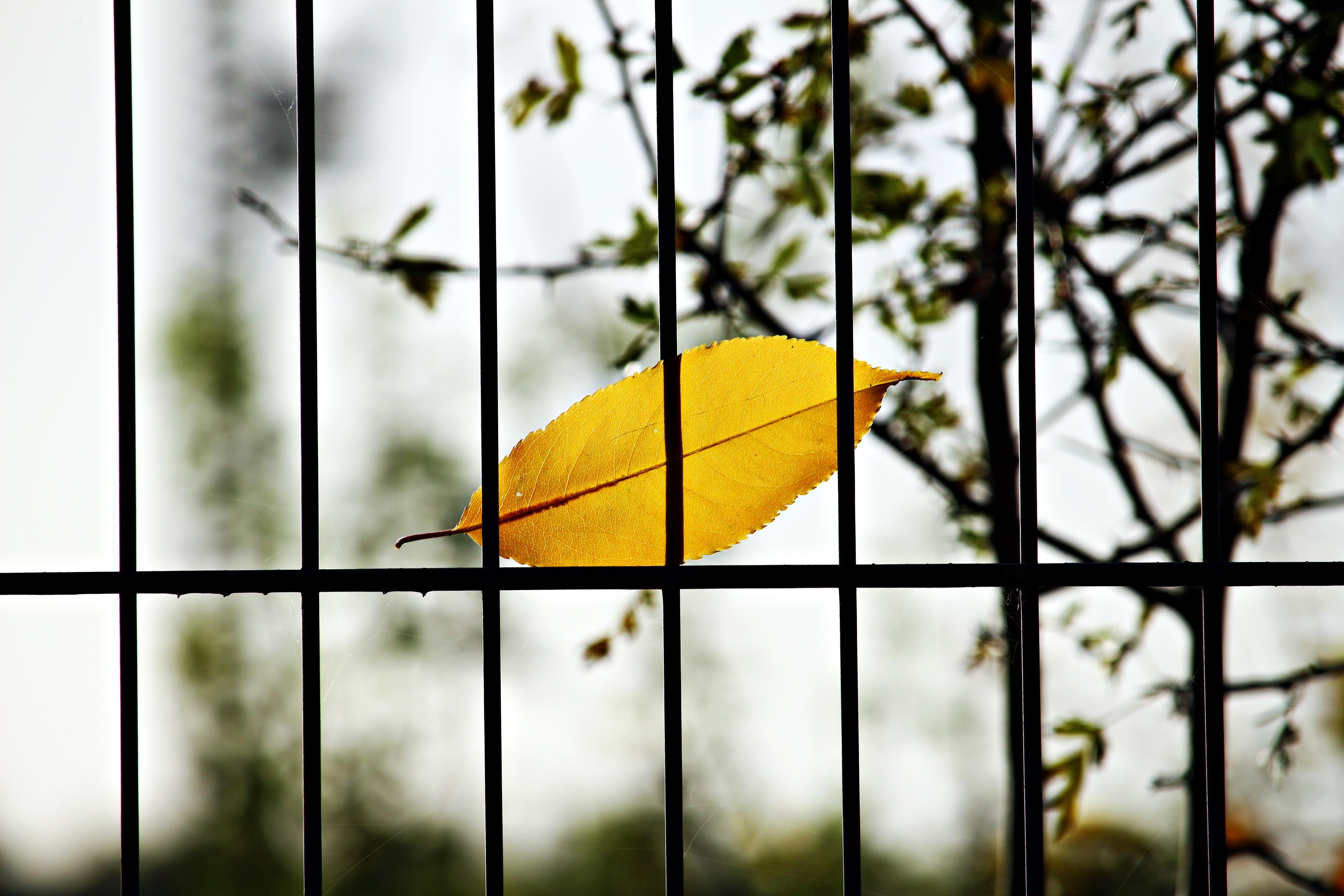 Branch Fence Sunlight Leaf Autumn Metal Yellow Gate Season Bars Grid Iron Fall Foliage Colorful