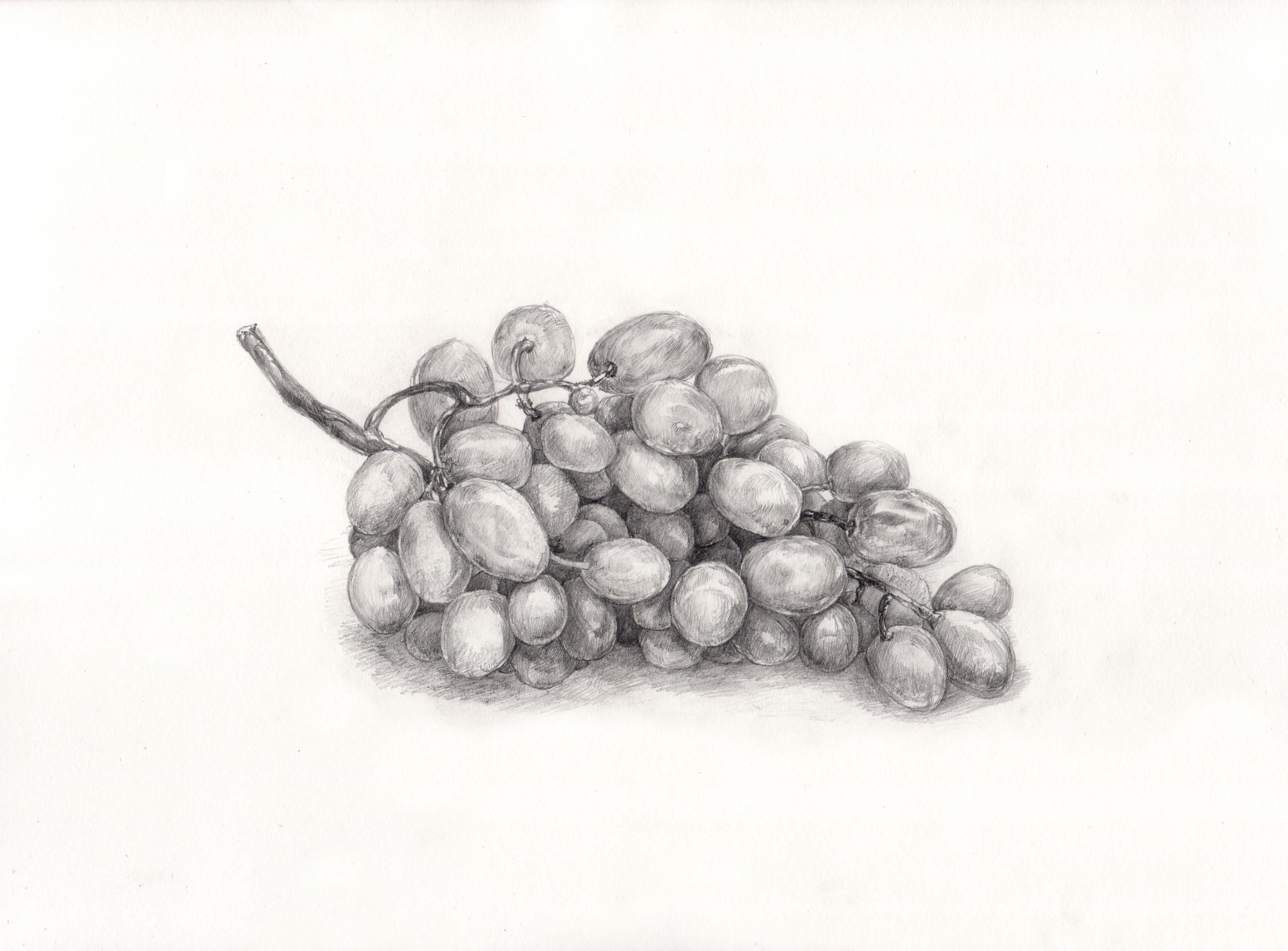 Gambar Cabang Anggur Buah Makanan Menghasilkan Titisan
