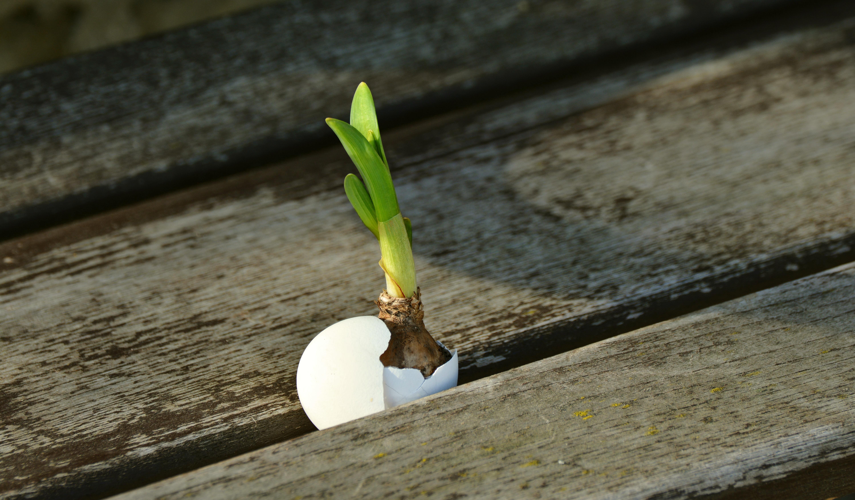 free images branch growth wood leaf flower spring