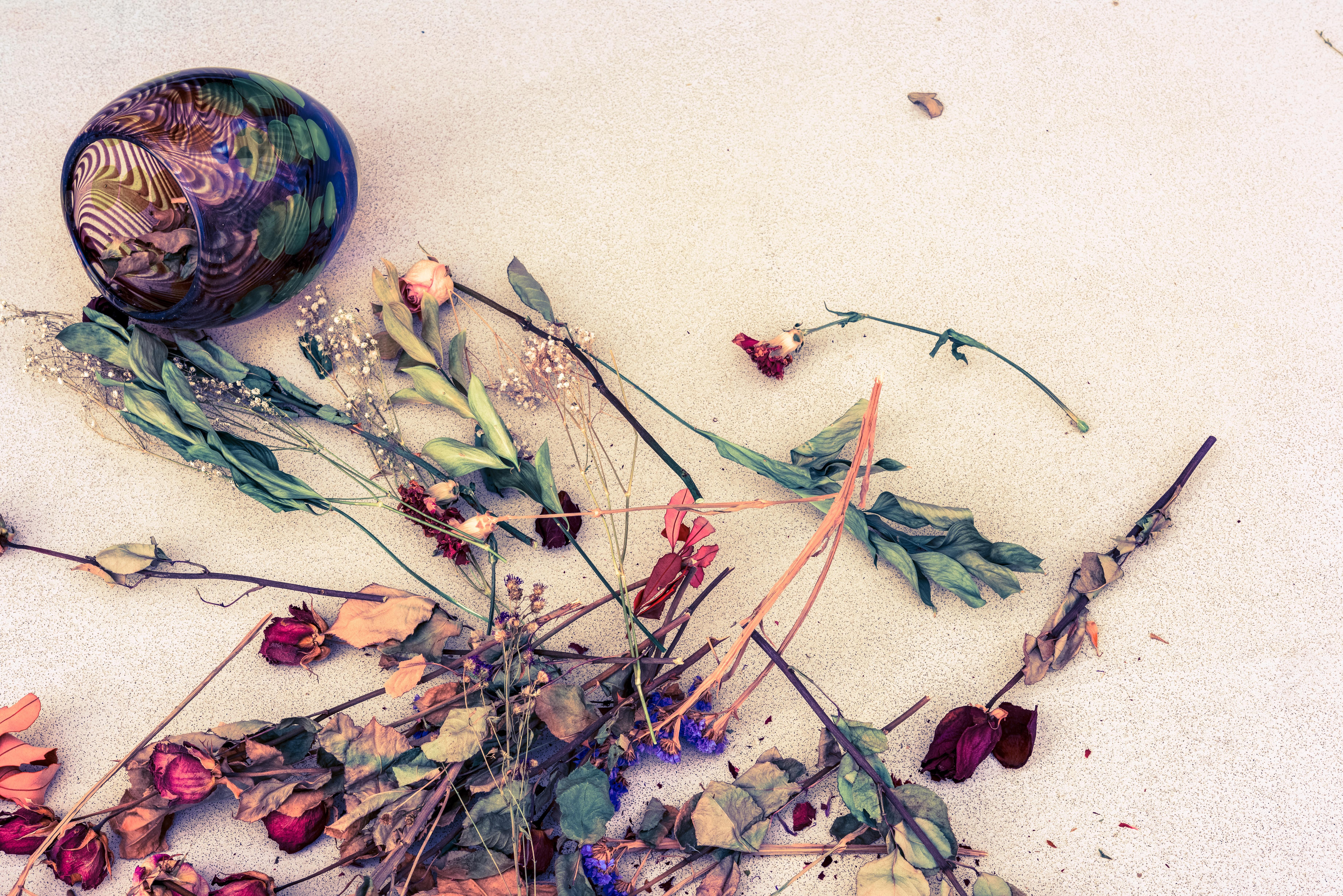 Free Images Branch Leaf Flower Pattern Color Art Sketch