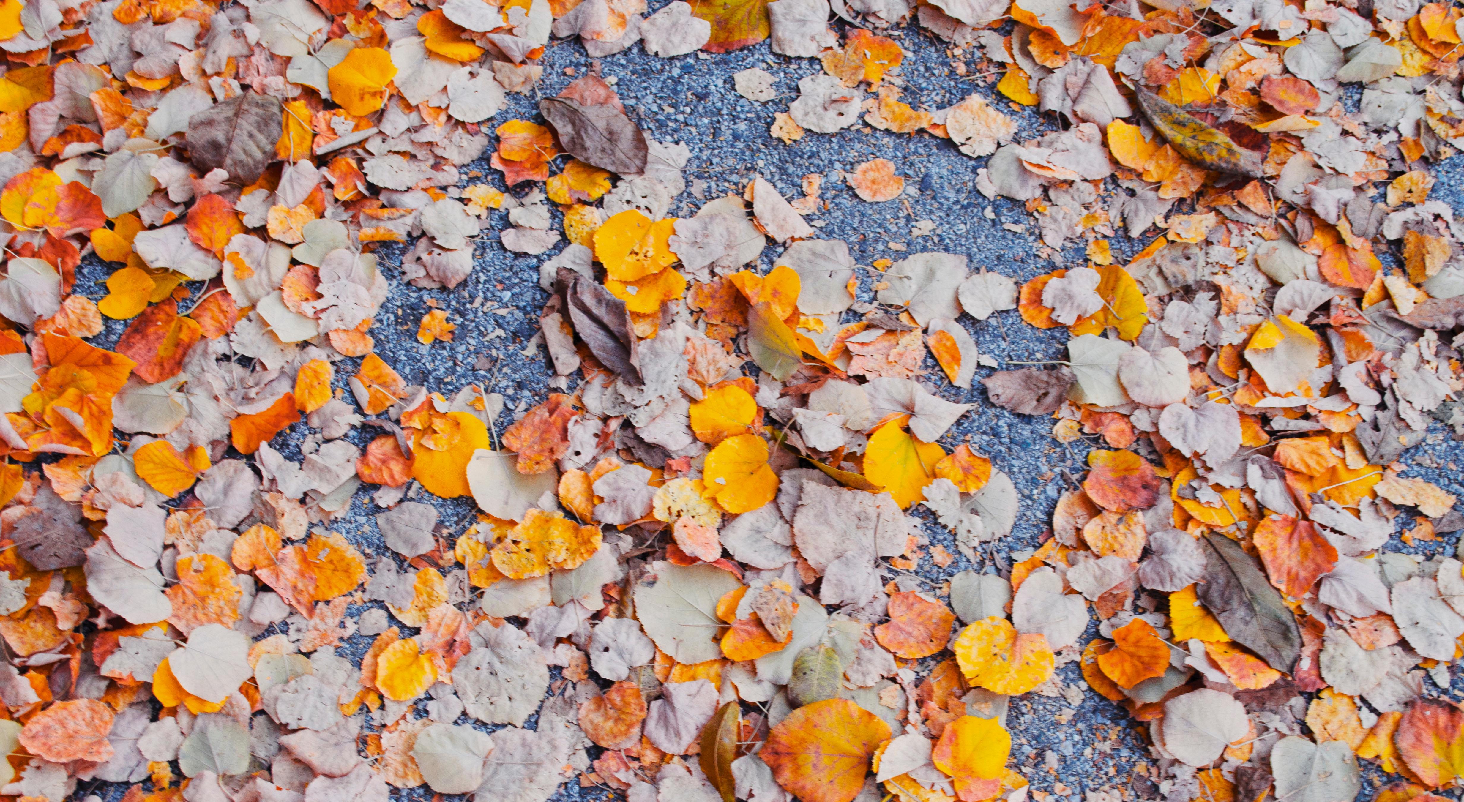 Kostenlose foto : Ast, Blatt, Orange, Farbe, Herbst, Gelb ...