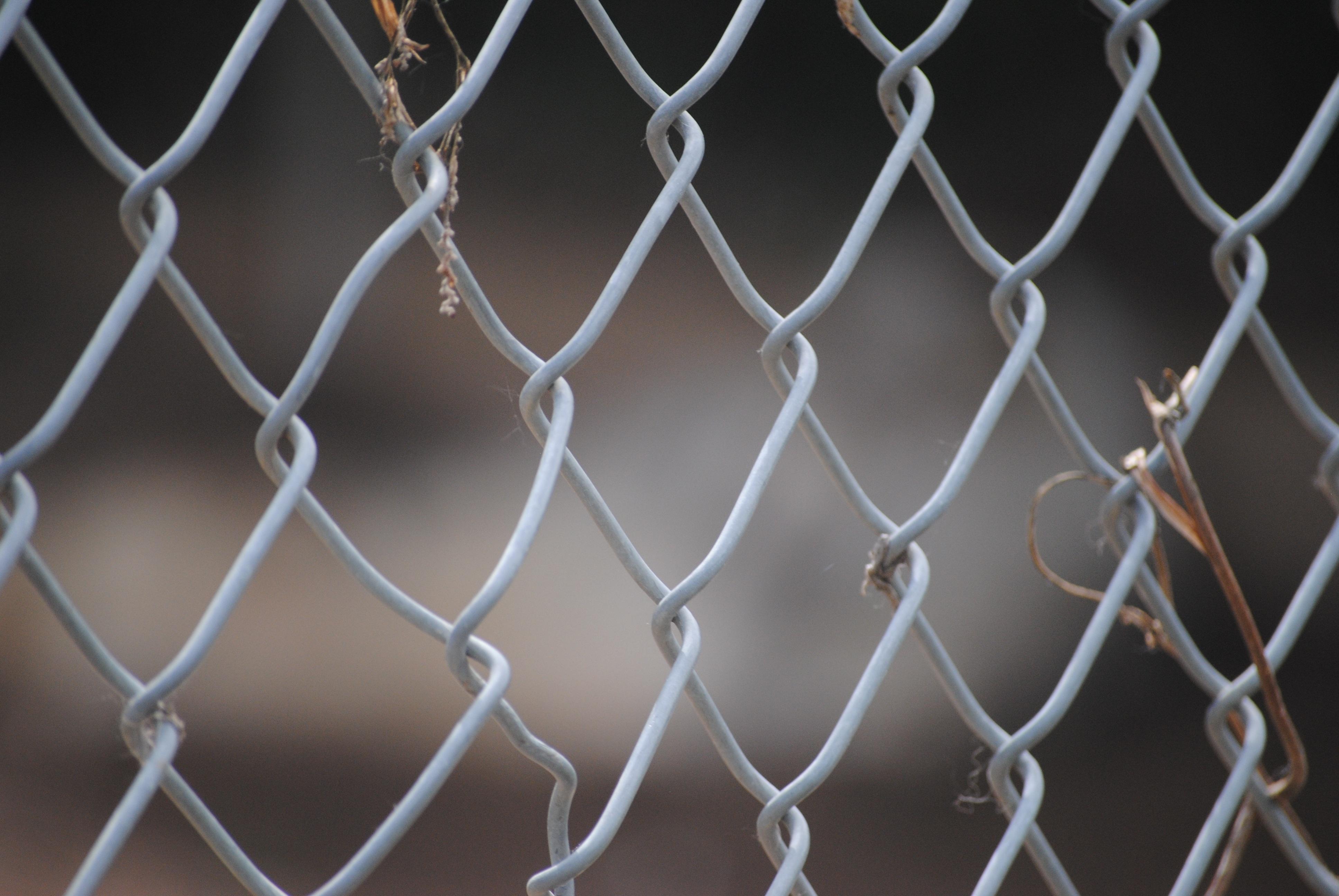 Kostenlose foto : Ast, Licht, Zaun, Weiß, Glas, Zoo, Linie, Makro ...