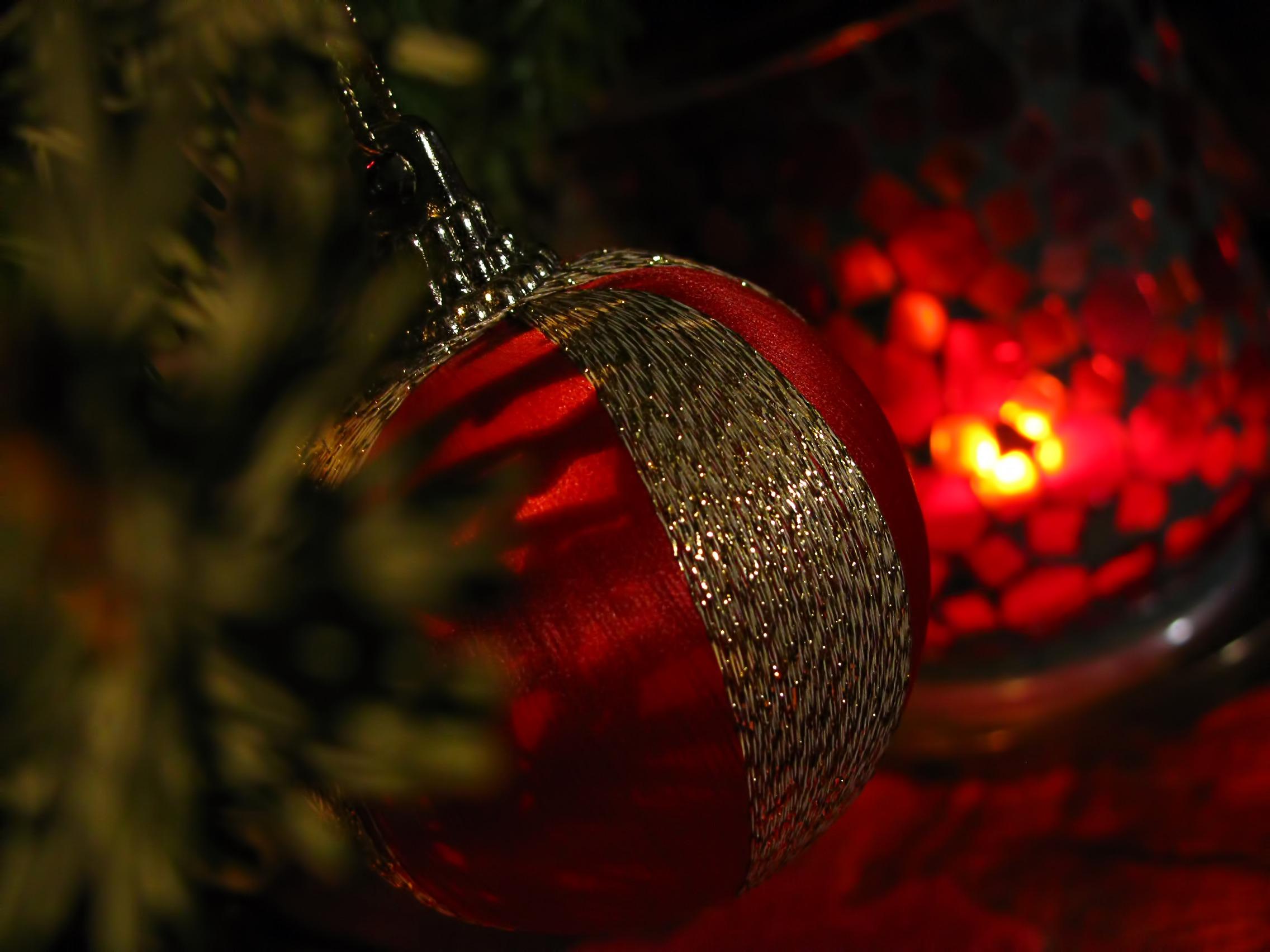 Fotos gratis : rama, ligero, noche, hoja, flor, pétalo, decoración ...