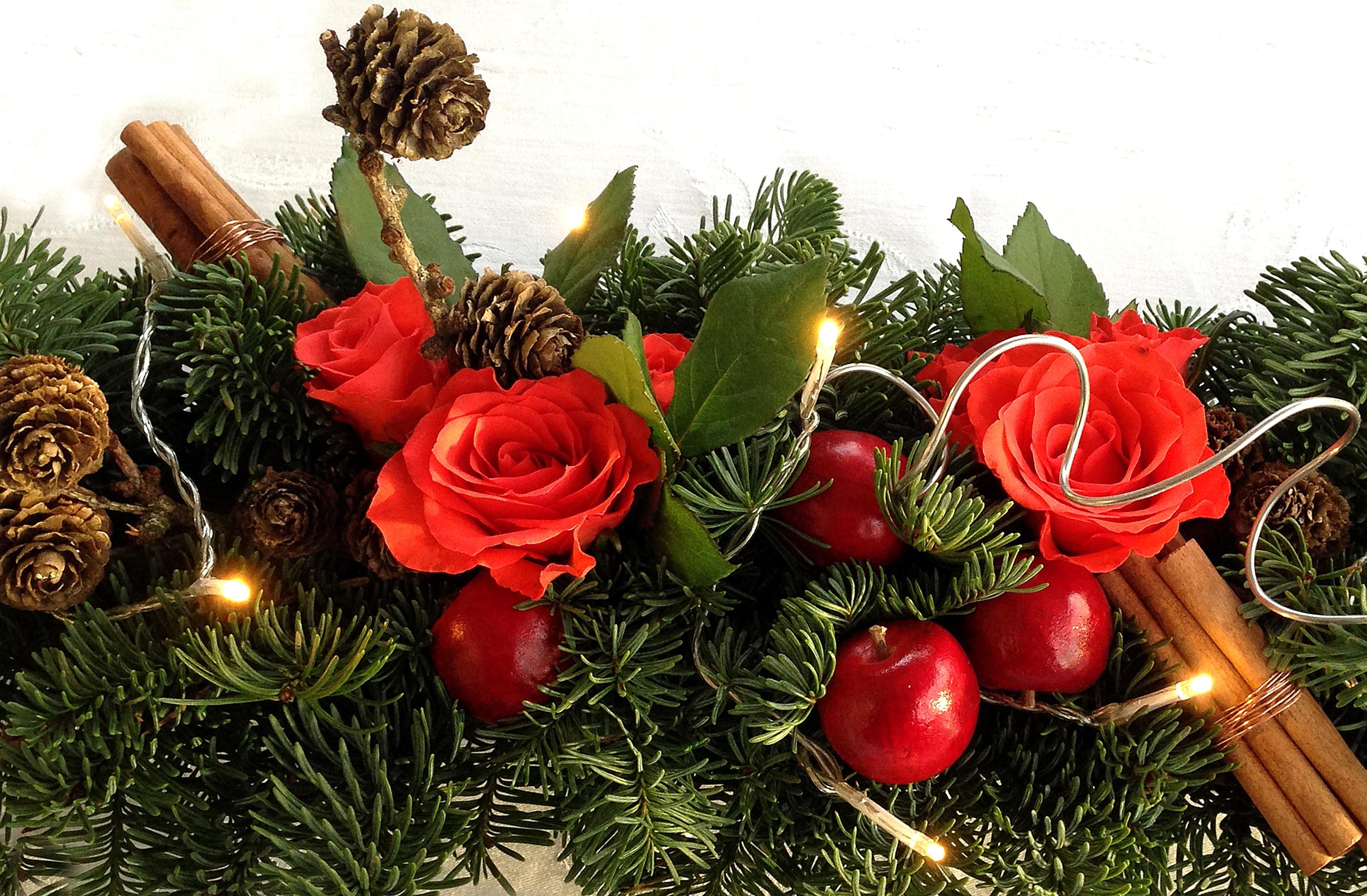 Images gratuites branche lumi re plante fleur rose for Plante rouge de noel