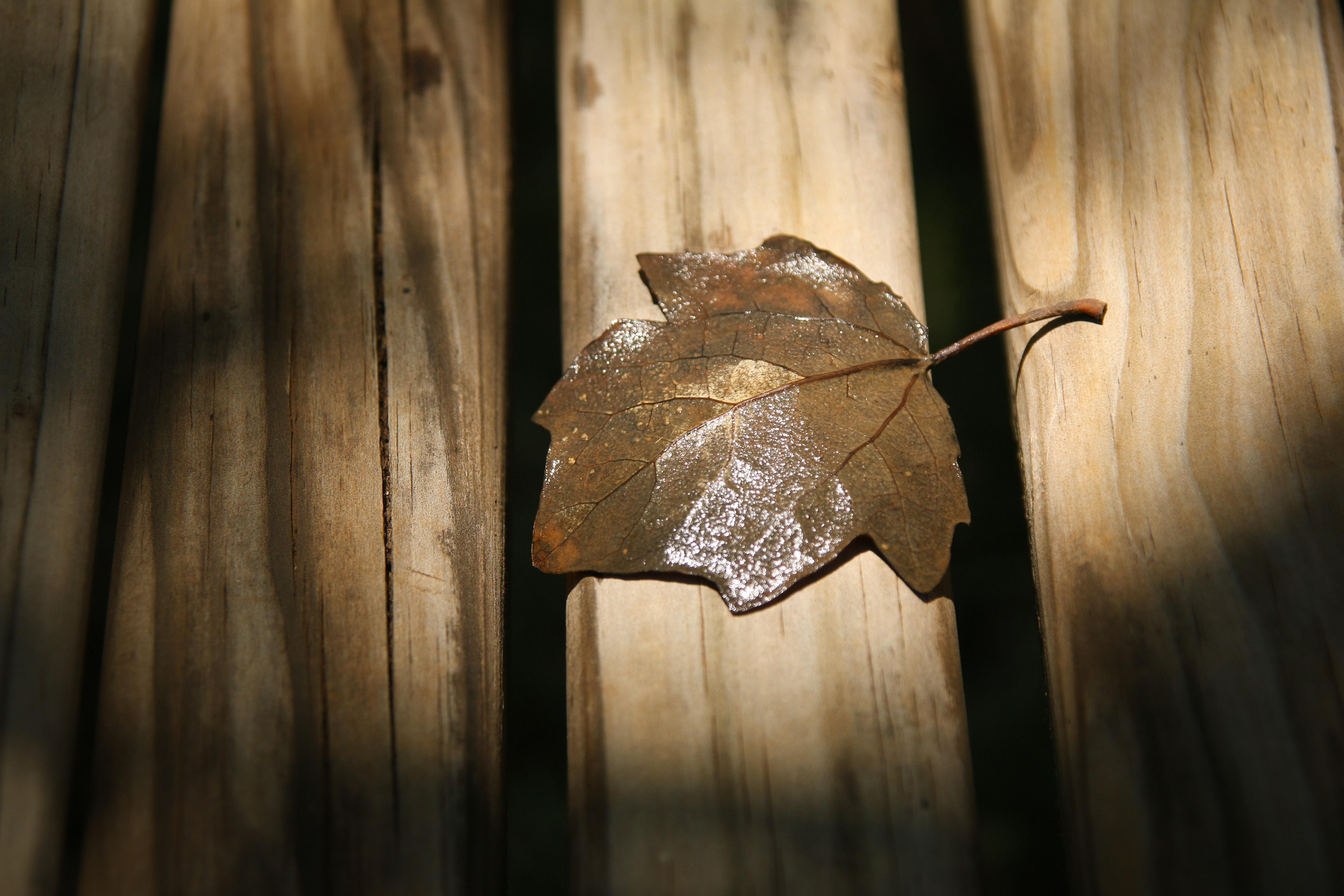 Kostenlose foto : Ast, Licht, Holz, Sonnenlicht, Betrachtung ...