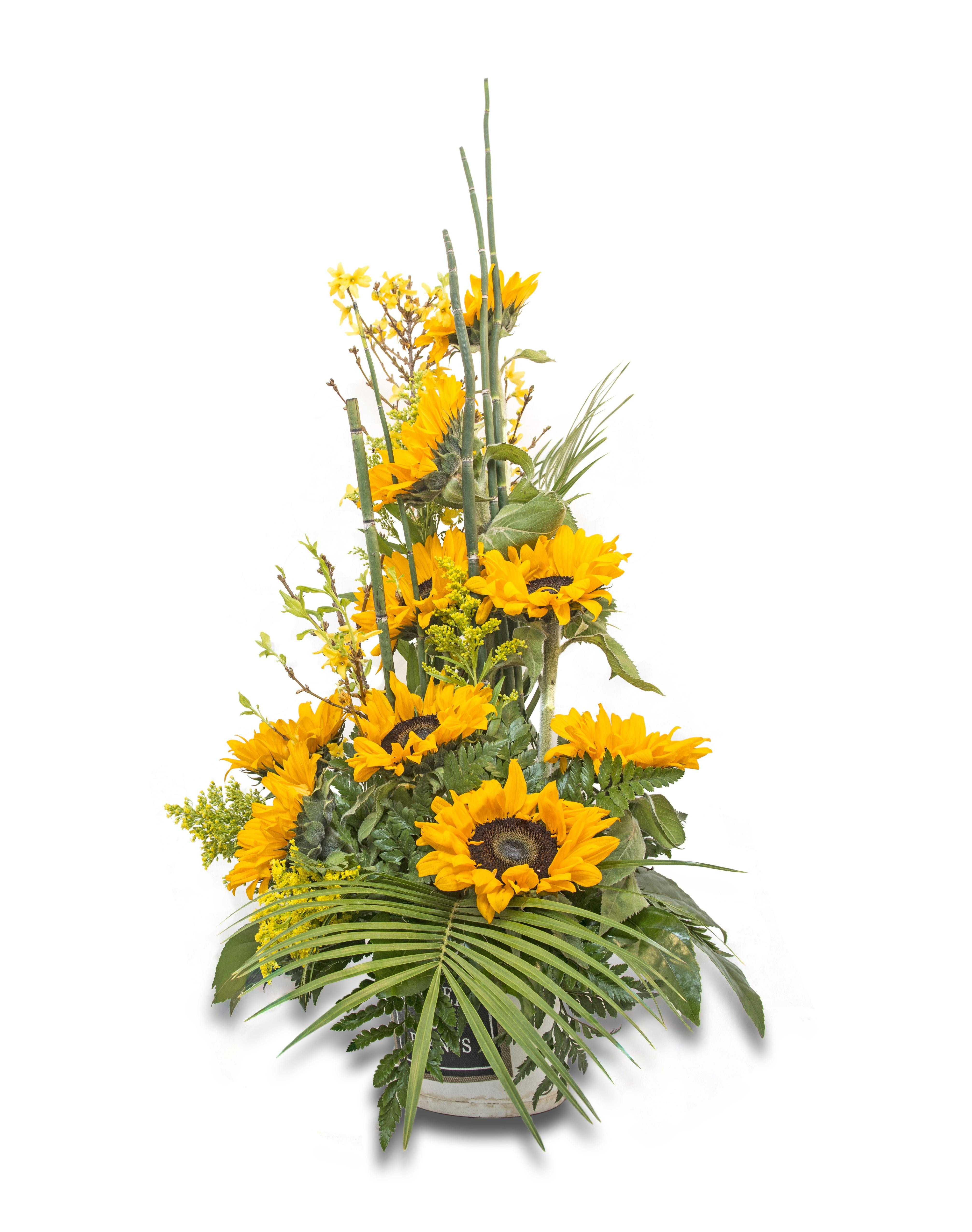 images gratuites : branche, fleur, jaune, tournesol, les plantes