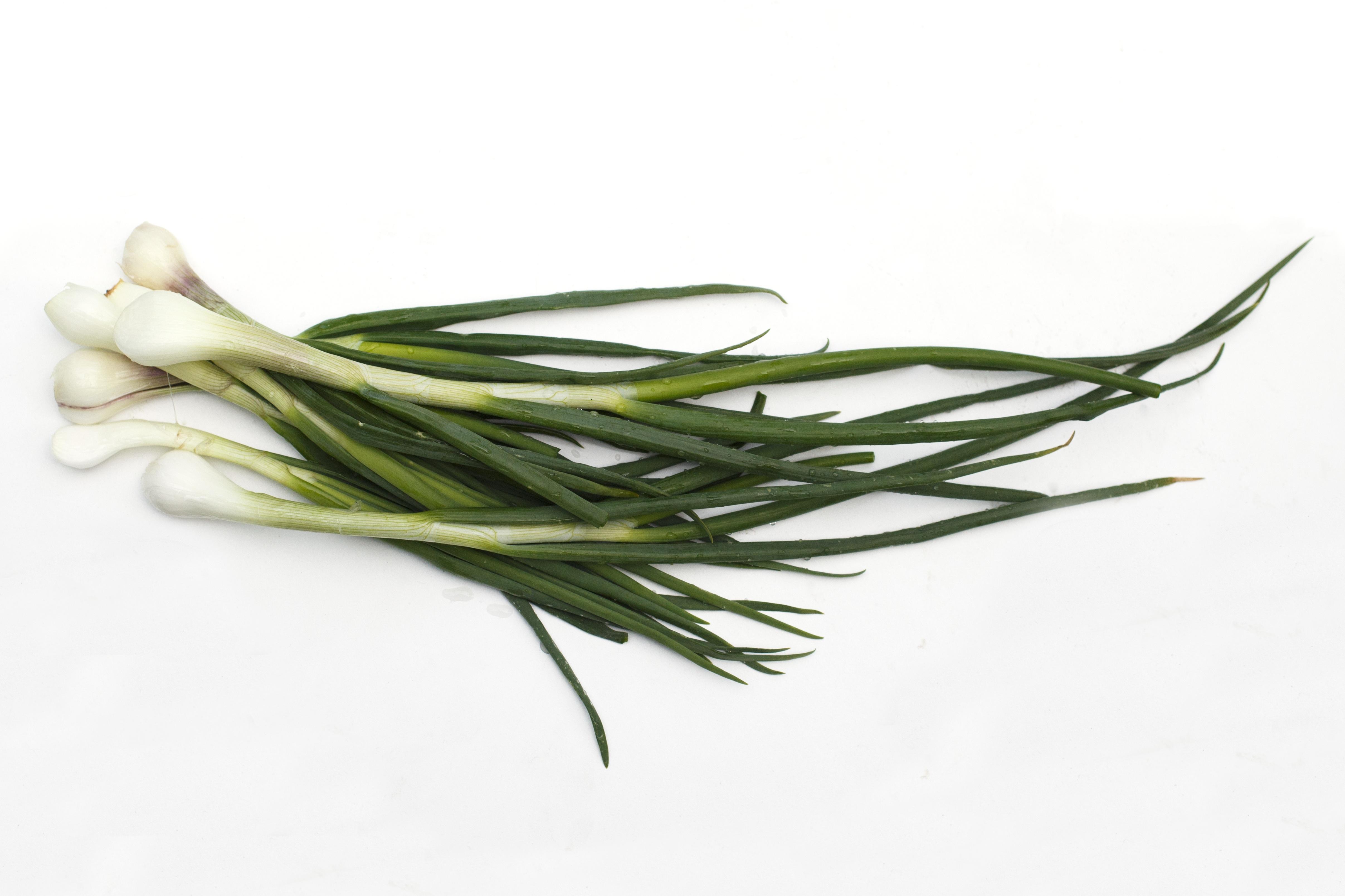 Зеленый лук фон картинки