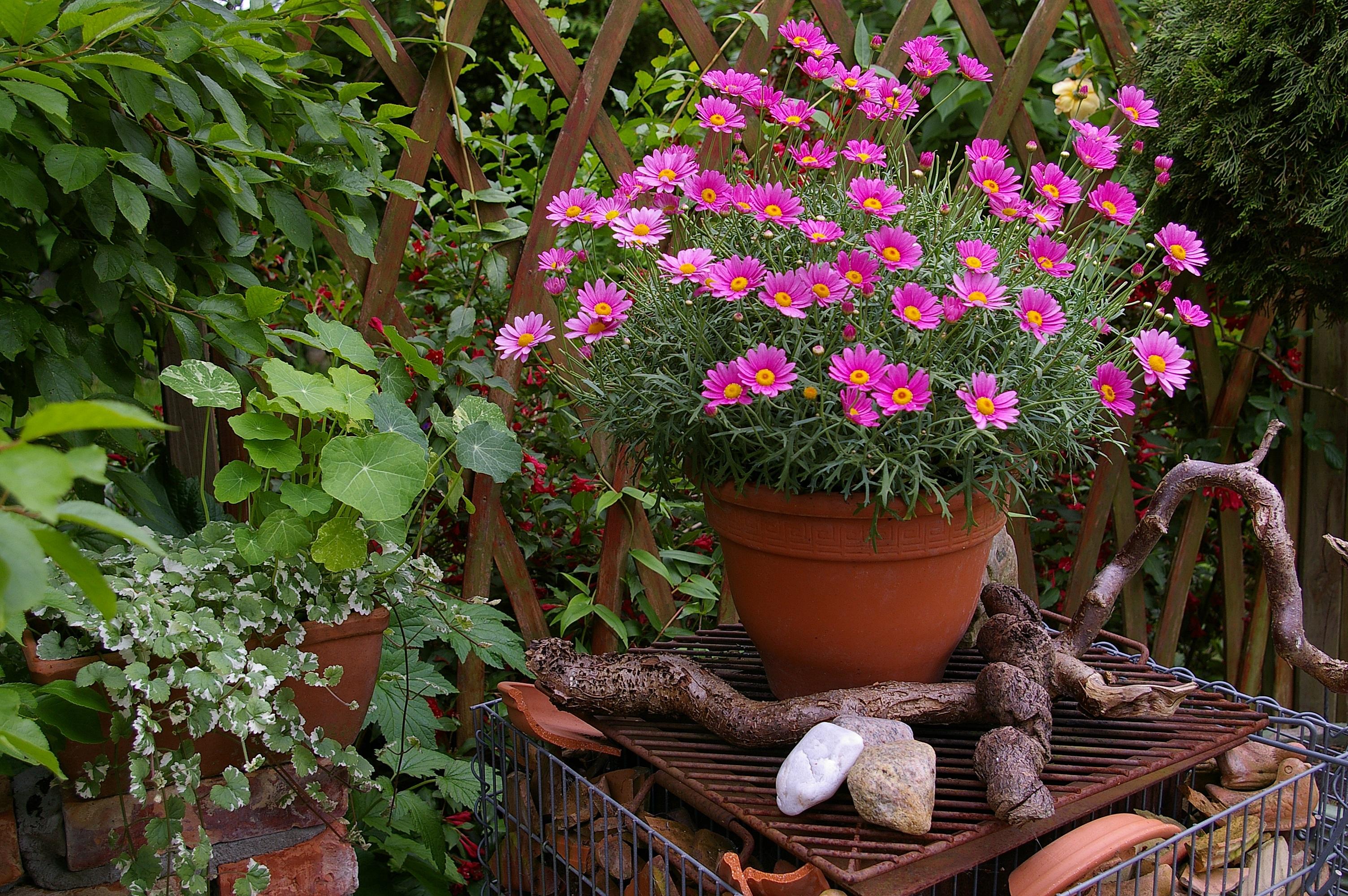 Images gratuites branche herbe arri re cour botanique for Arbuste deco jardin