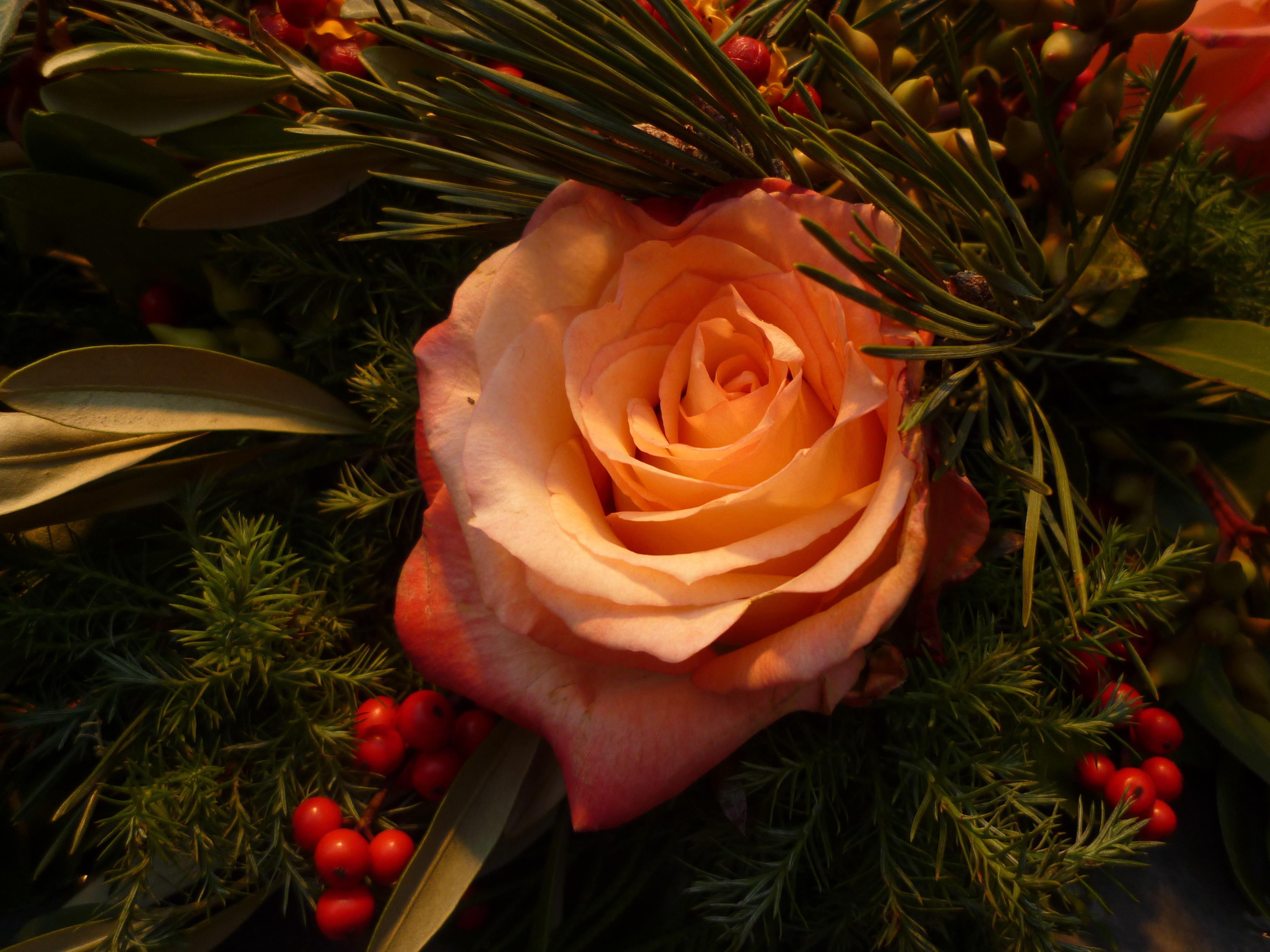 Images Gratuites : branche, fleur, pétale, Rose, rouge, romantique, flore, arbre de Noël ...