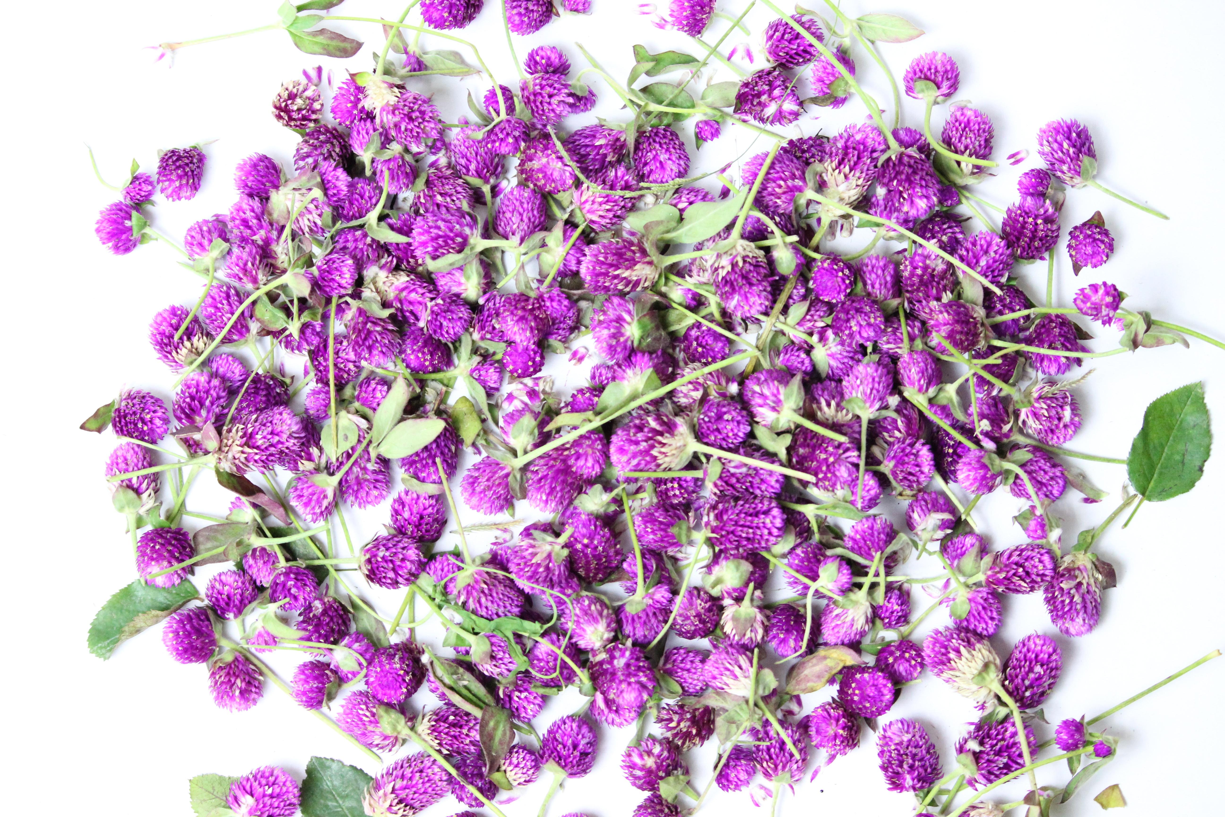 Immagini belle ramo fiore viola petalo erba lilla for Pianta fiori viola