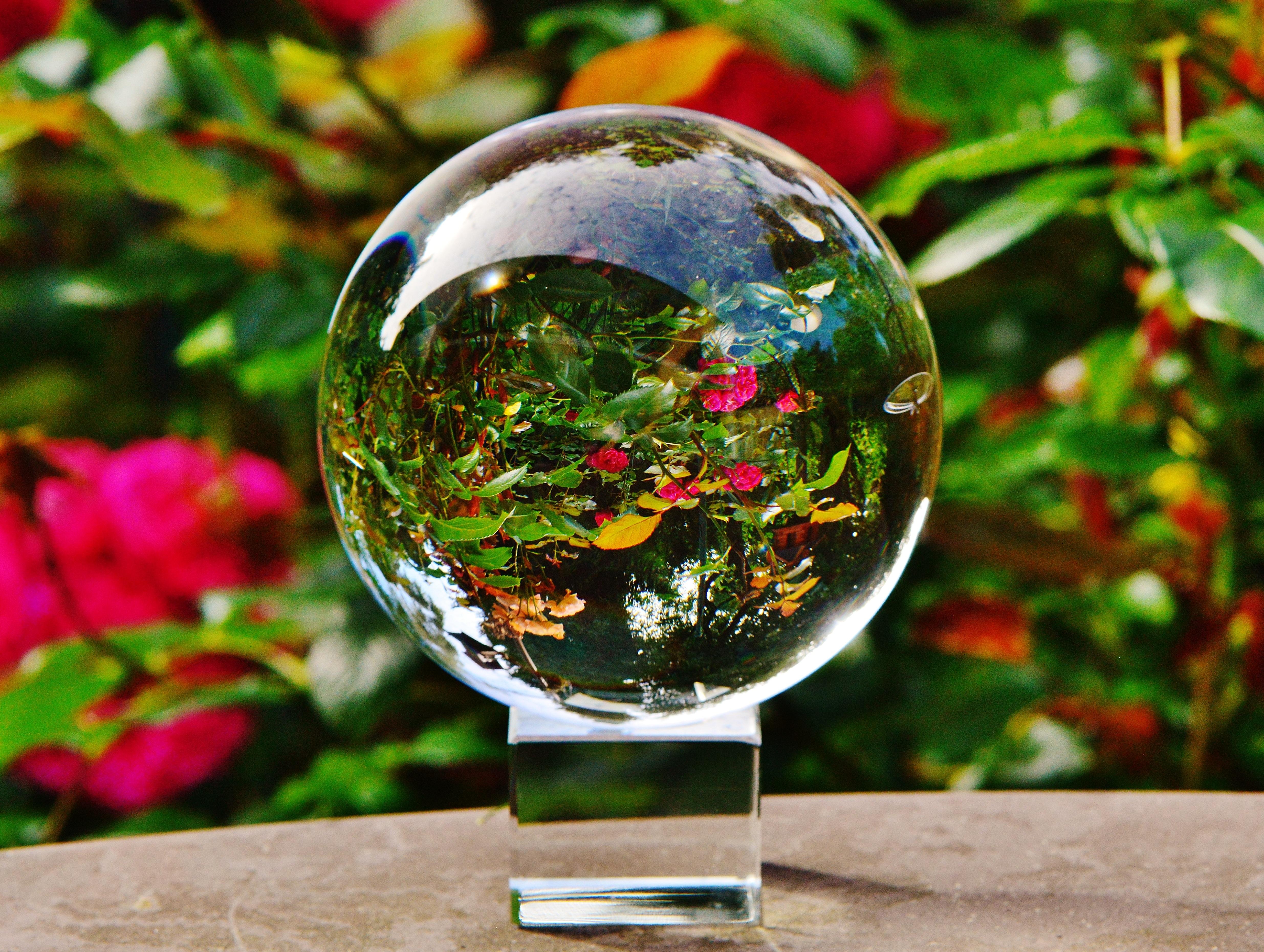 Цветы с глобусом, цветов холодного цветы