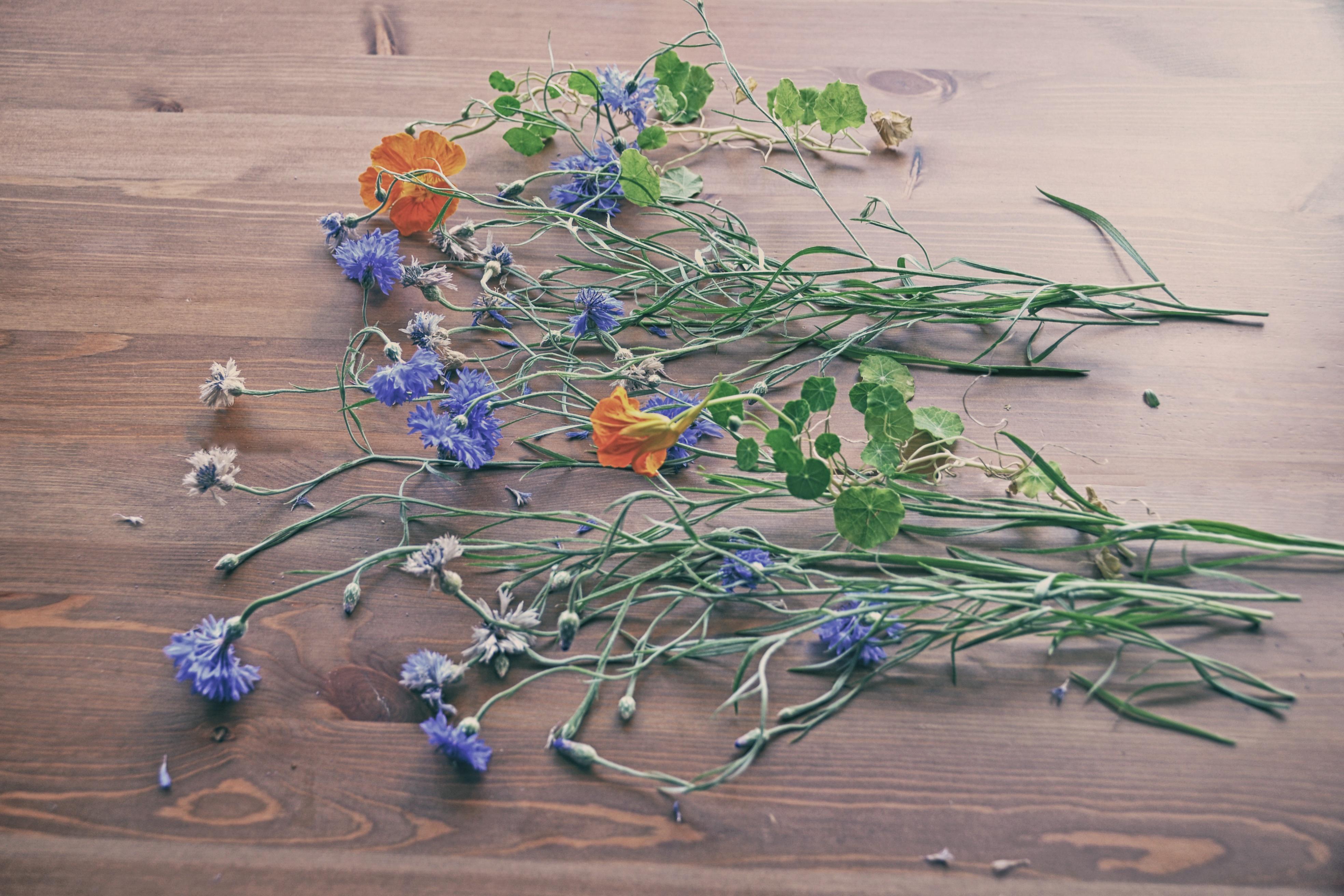 Fotoğraf şube Yaprak çiçek Botanik Bitki örtüsü Natürmort