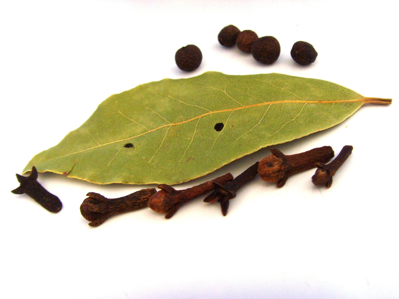 Gratis Billeder Afdeling Plante Blad Fremstille Krydderier