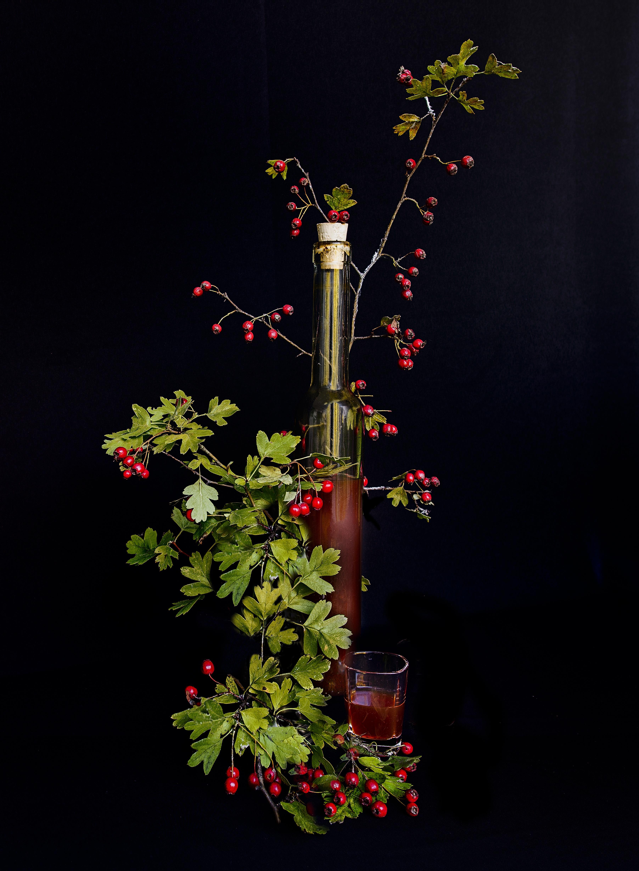 hình ảnh : chi nhánh, thực vật, đêm, Lá, Đỏ, bóng tối, thắp sáng, Hệ thực vật, Trang trí giáng sinh, nghệ thuật, Quả mọng, Rượu mùi, Trồng hoa, Táo, ...