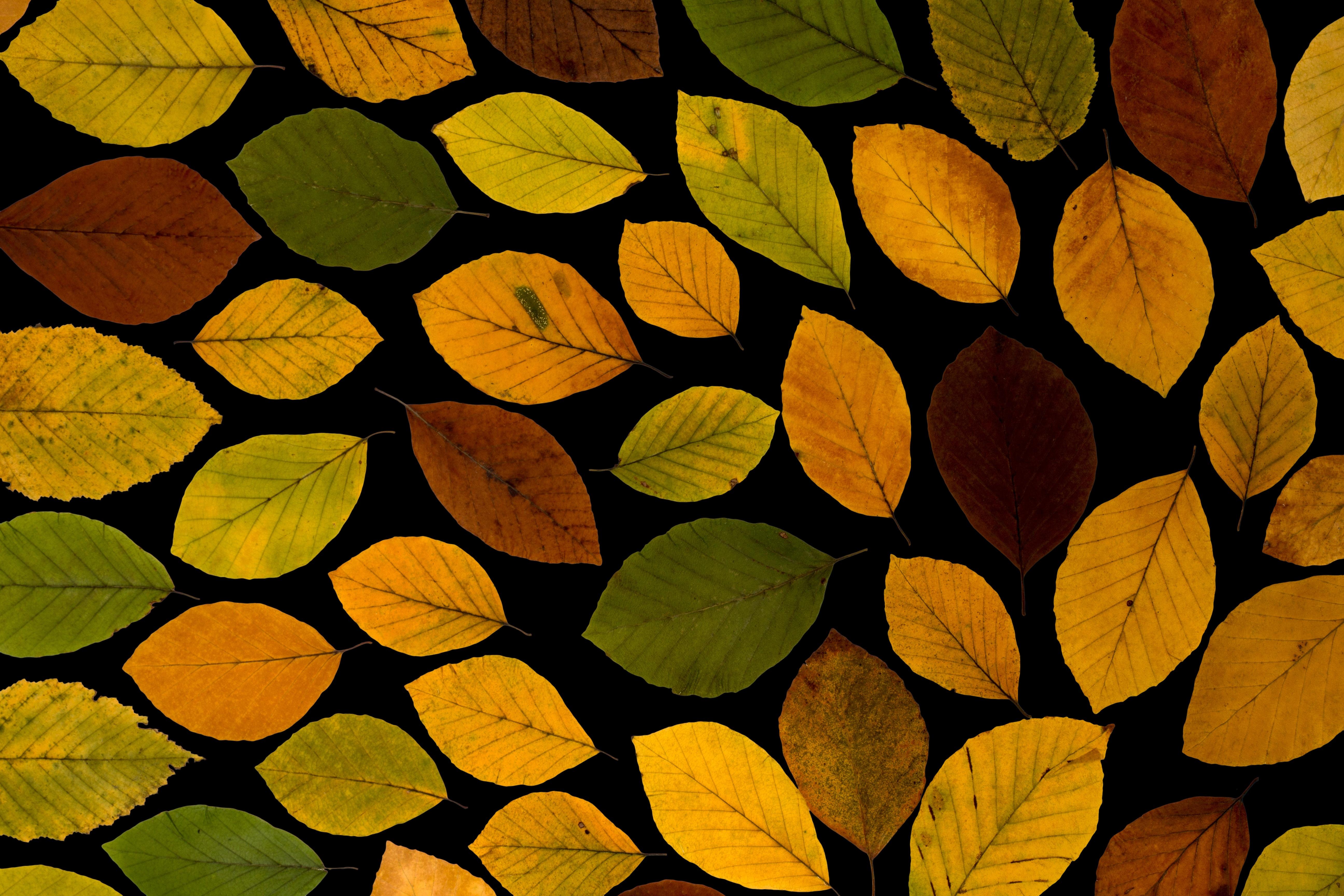 Fotos gratis : rama, planta, luz de sol, árido, flor, pétalo, seco ...