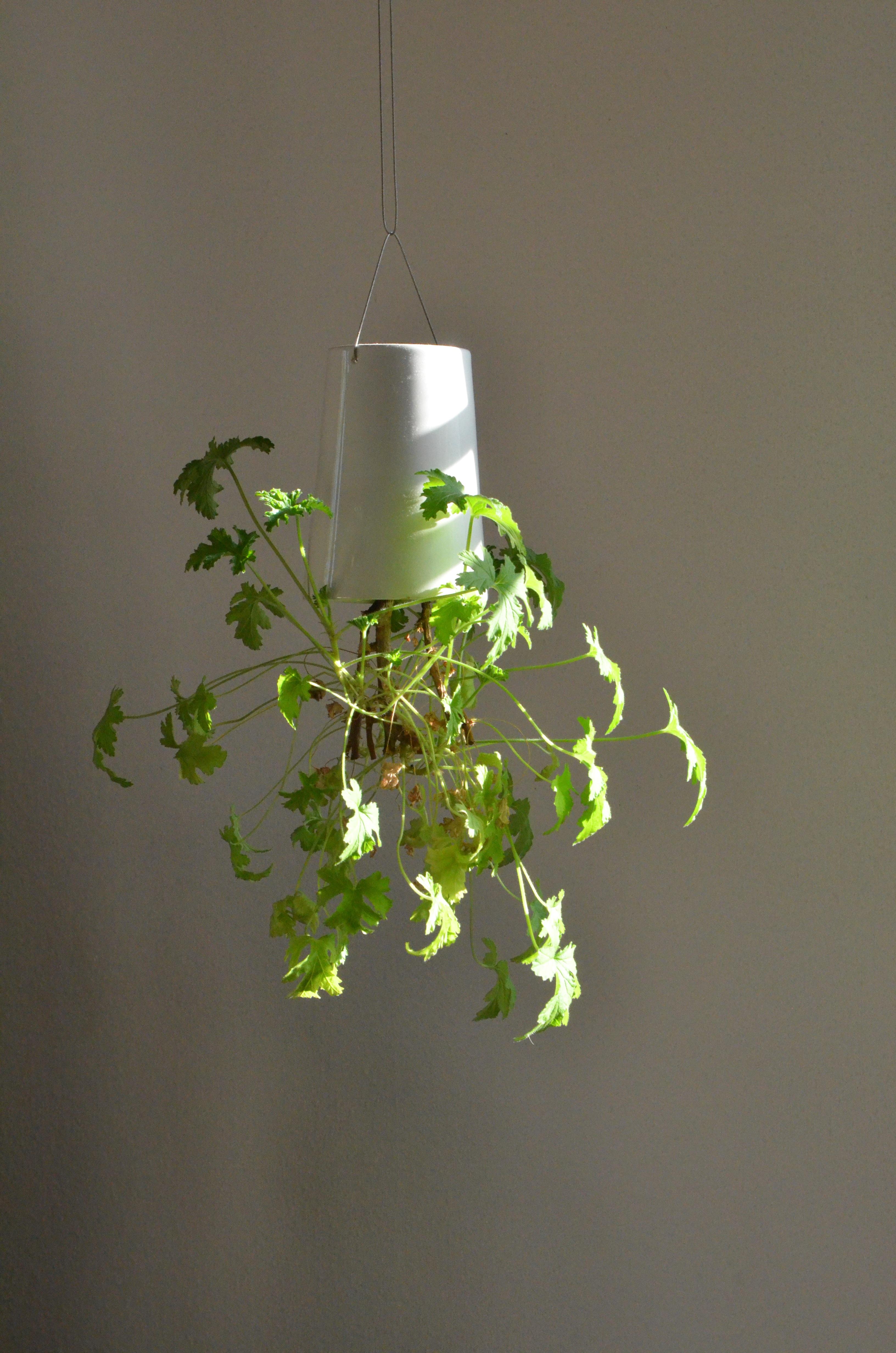 kostenlose foto ast pflanze wei blatt blume gr n lampe h ngend beleuchtung zweig. Black Bedroom Furniture Sets. Home Design Ideas