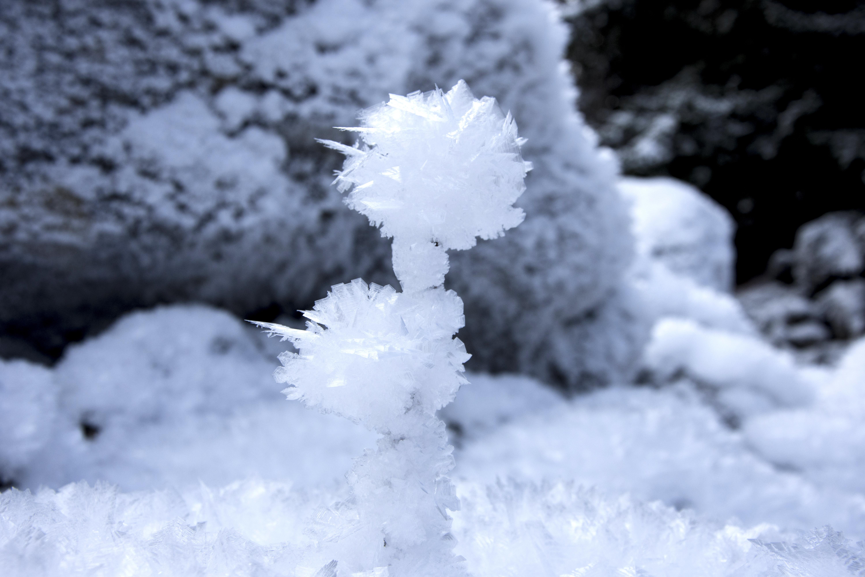 Gambar Cabang Salju Musim Dingin Putih Embun Beku Es Cuaca