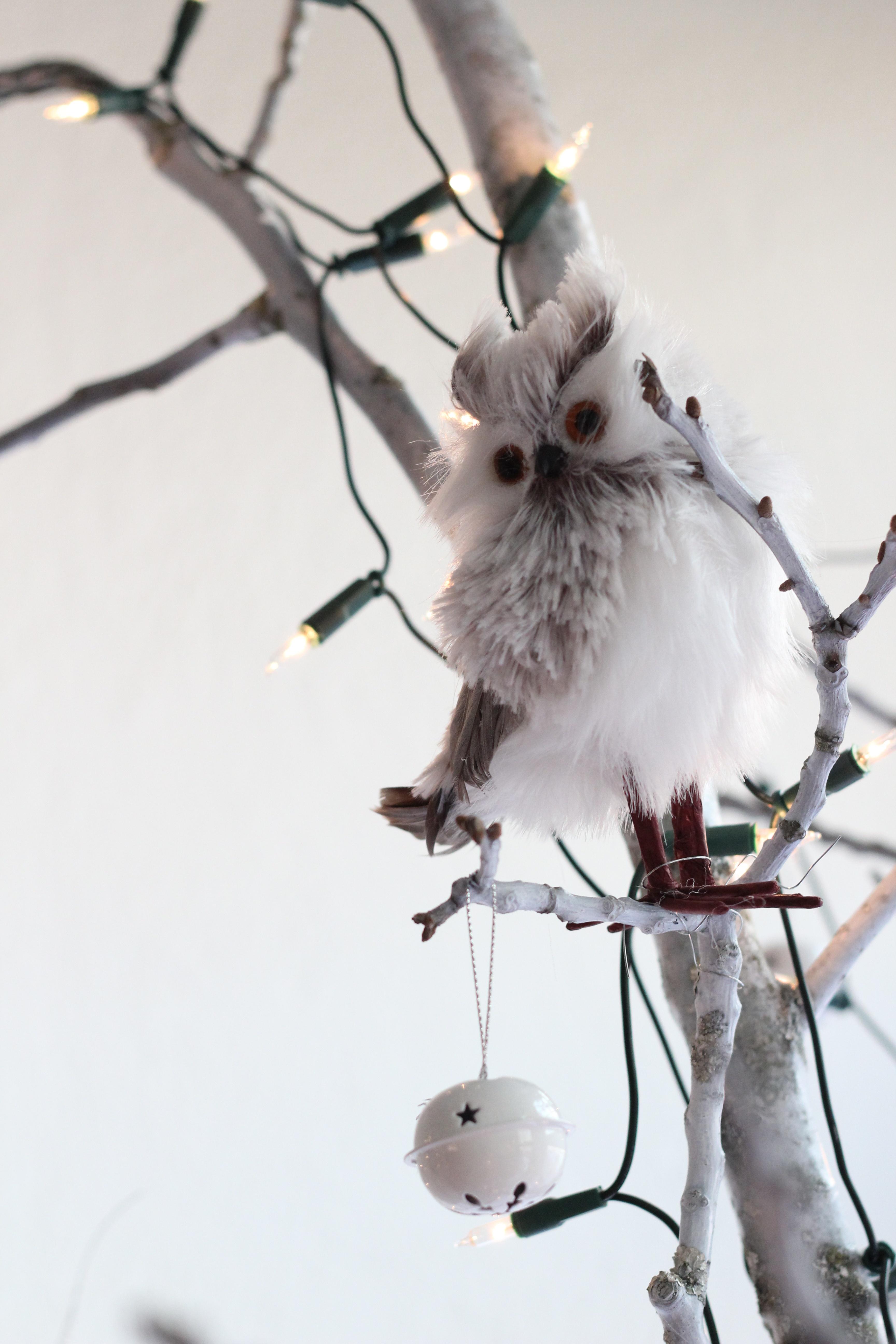 kostenlose foto ast schnee winter vogel wei blume. Black Bedroom Furniture Sets. Home Design Ideas