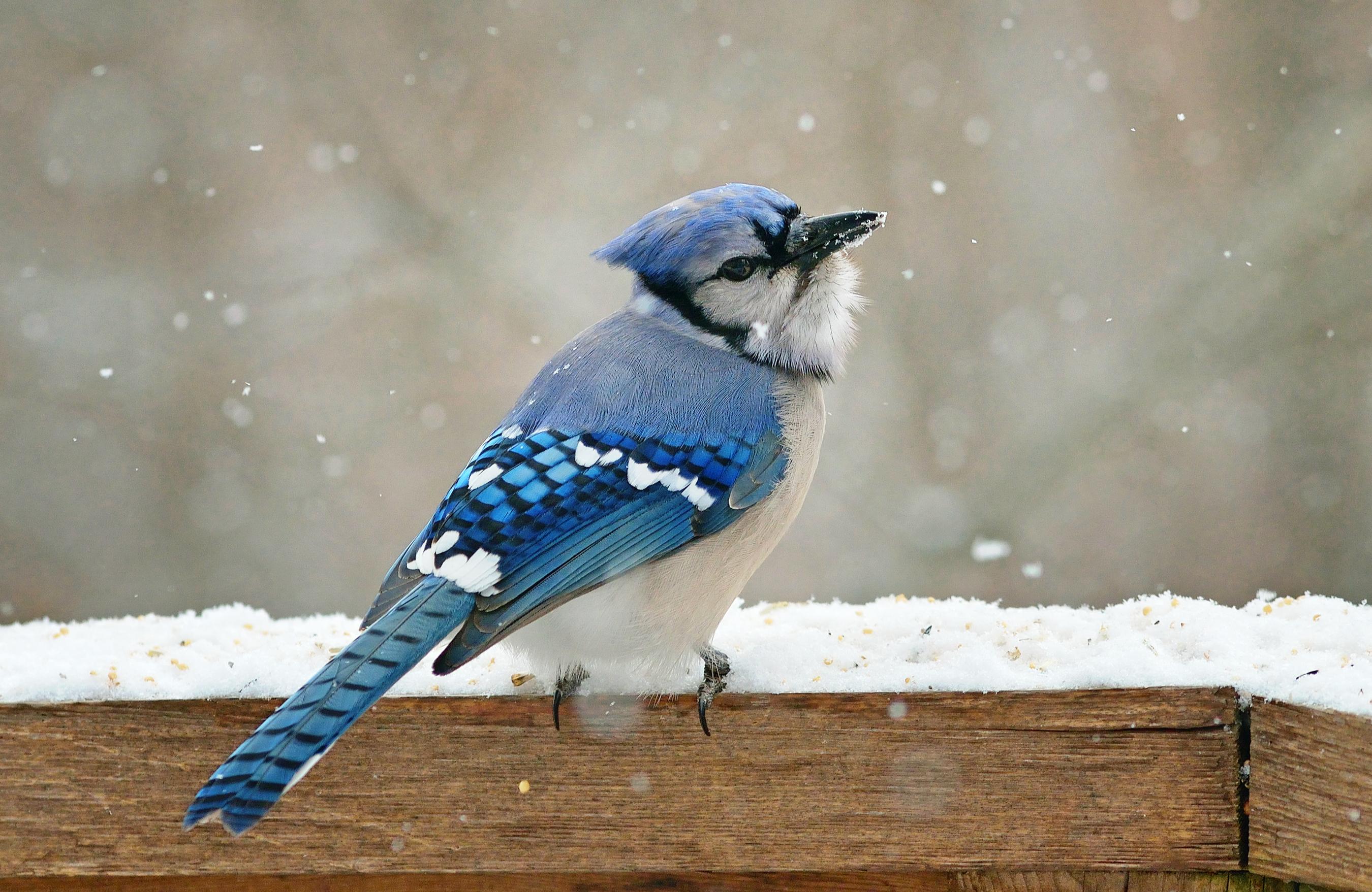 странице зимние птички фото семье без
