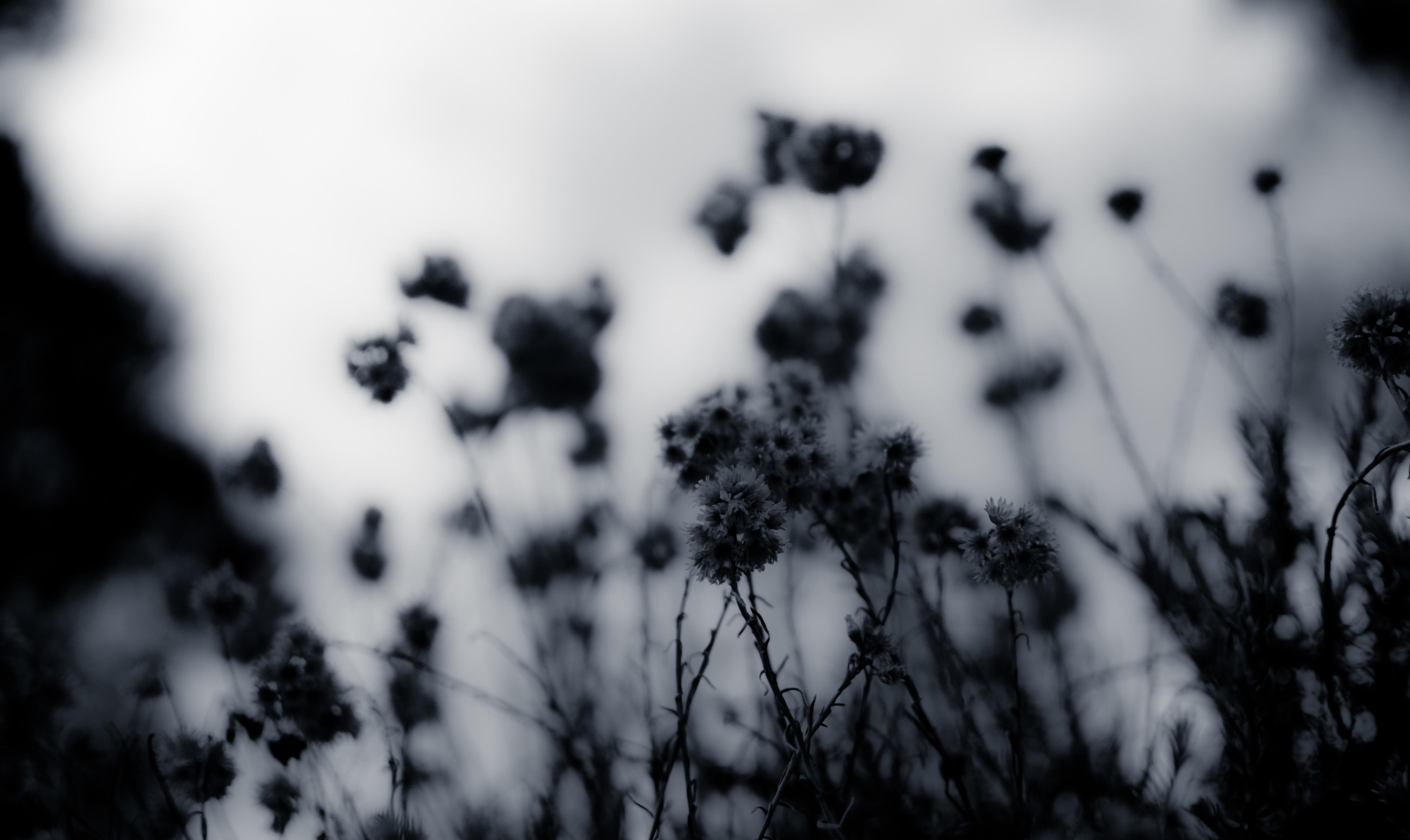 сон, затемнение части черно белой фотографии такие шубы