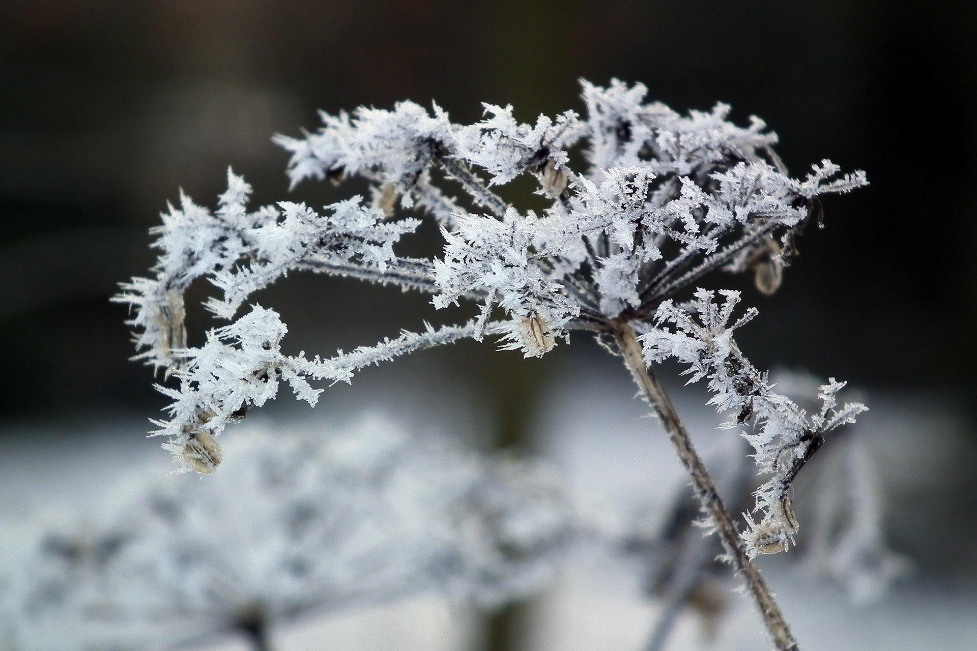 Gambar Cabang Salju Musim Dingin Embun Beku Es Ranting