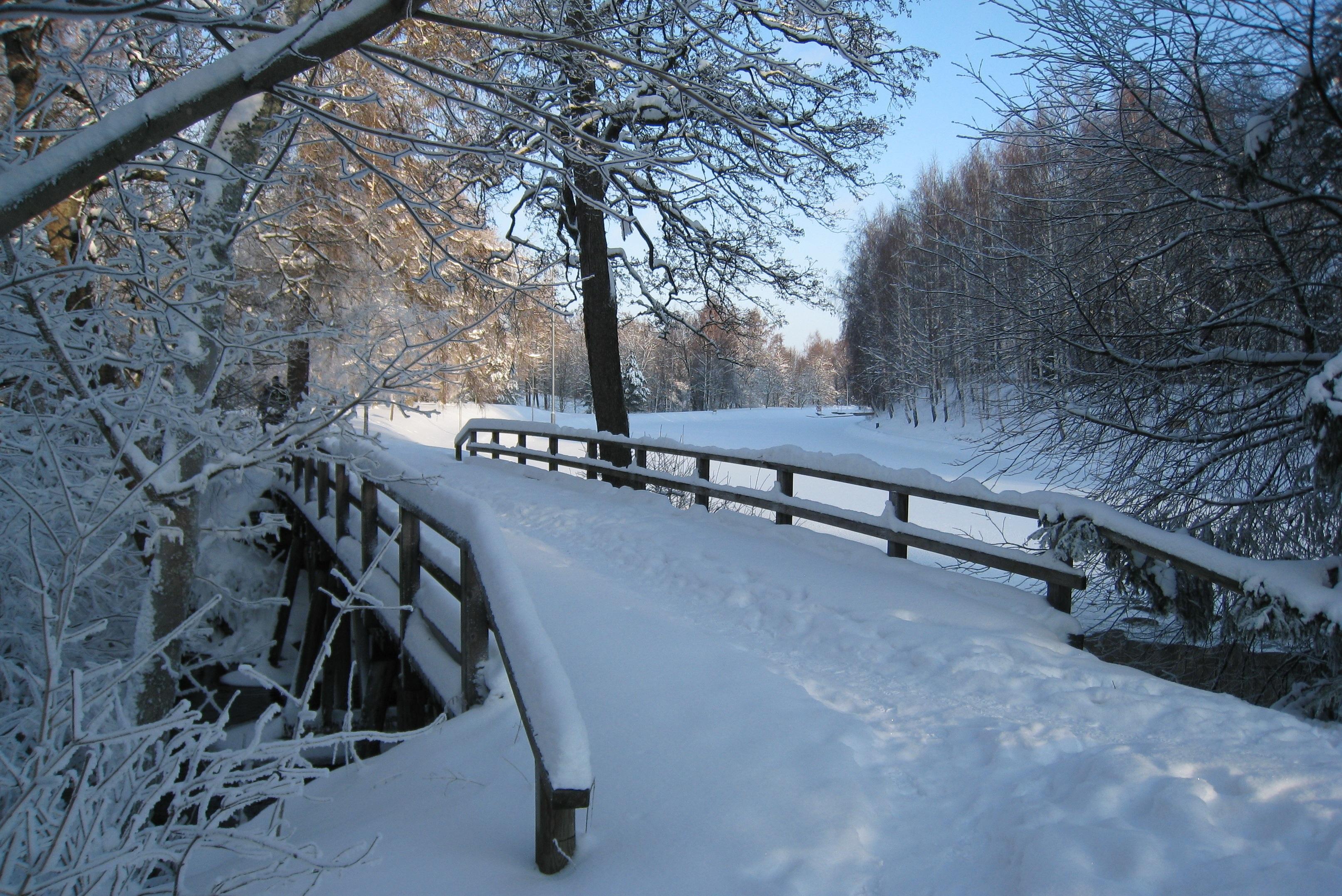 Fotos gratis rama escarcha clima nevado temporada for Imagenes de patios de invierno