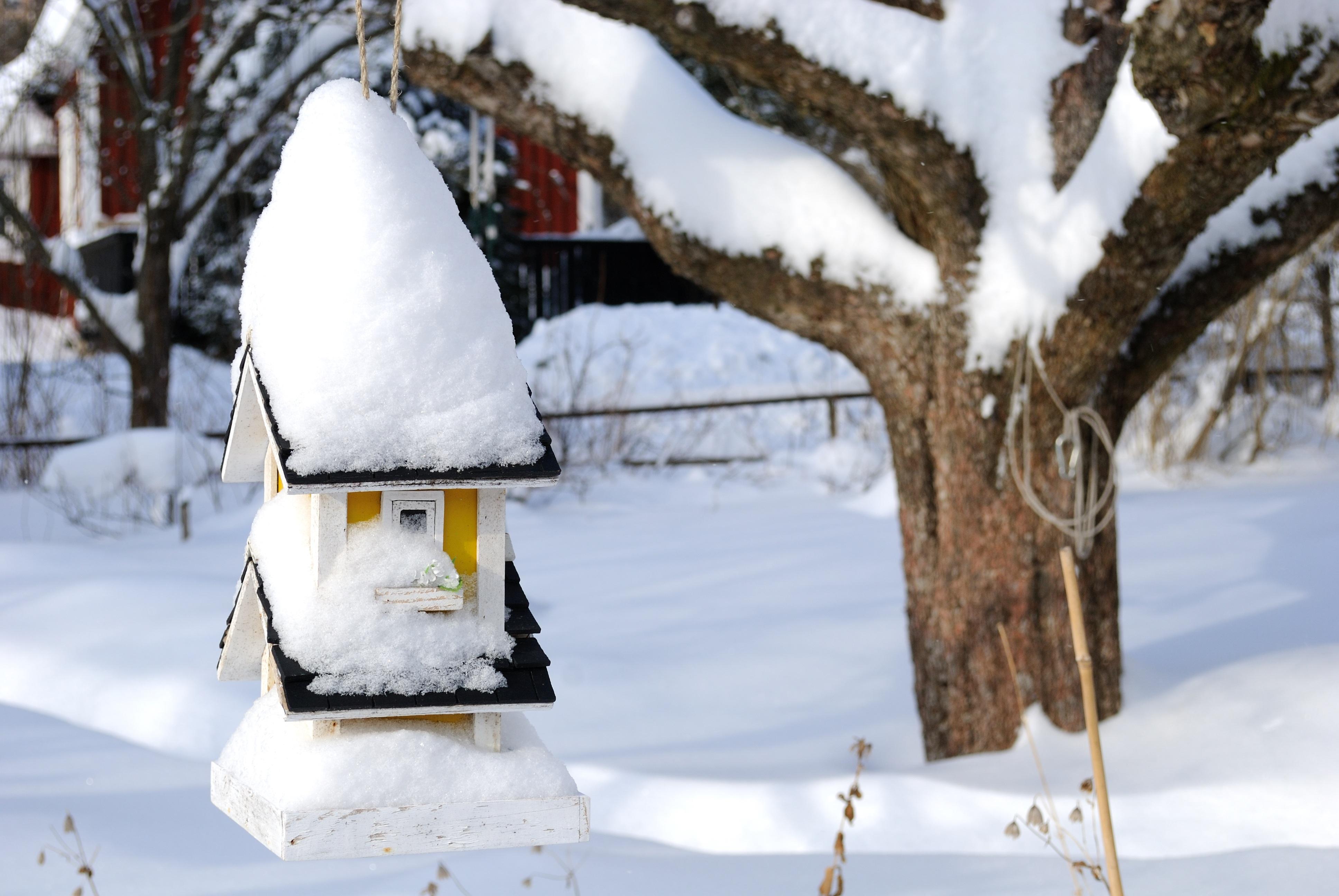 kostenlose foto ast schnee winter wetter jahreszeit stamm schneemann vogelhaus. Black Bedroom Furniture Sets. Home Design Ideas