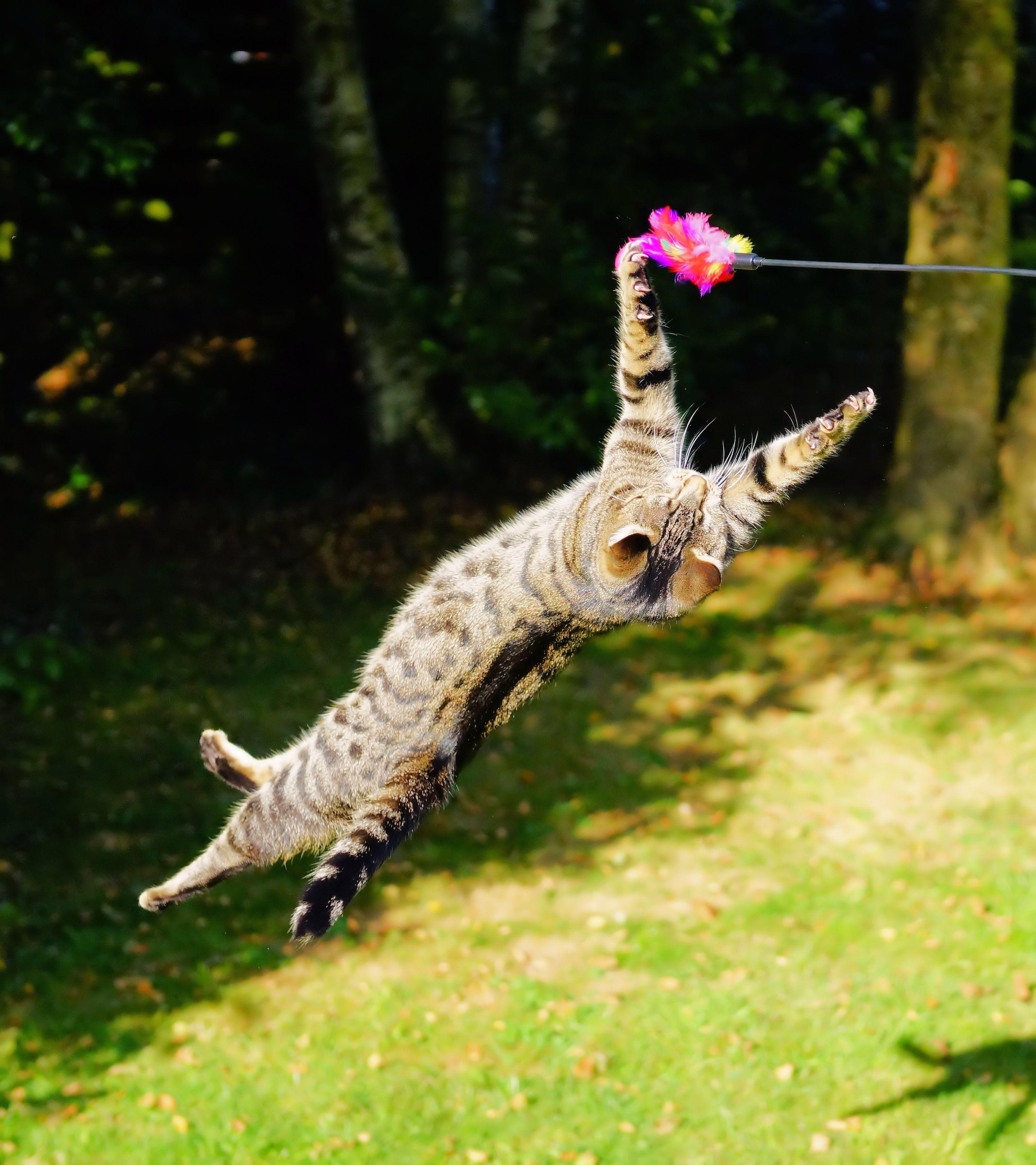 Unduh 99+  Gambar Kucing Olahraga Terbaik HD
