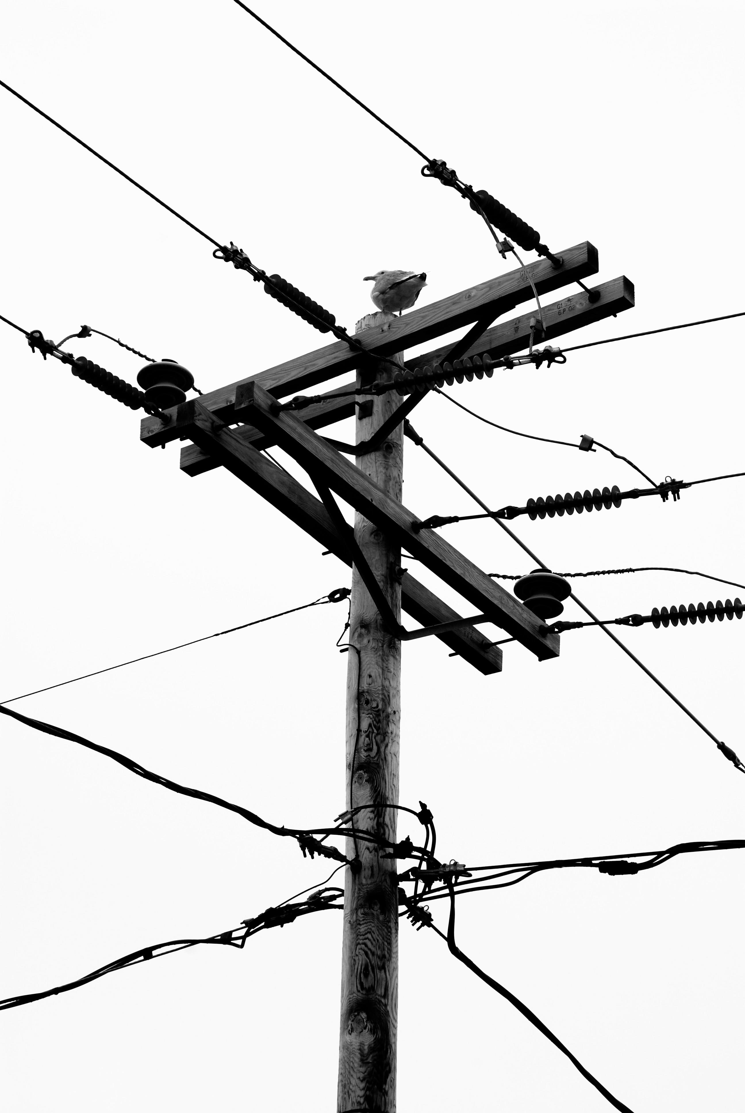Kostenlose foto : Ast, Technologie, Antenne, Linie, Mast, Nikon ...