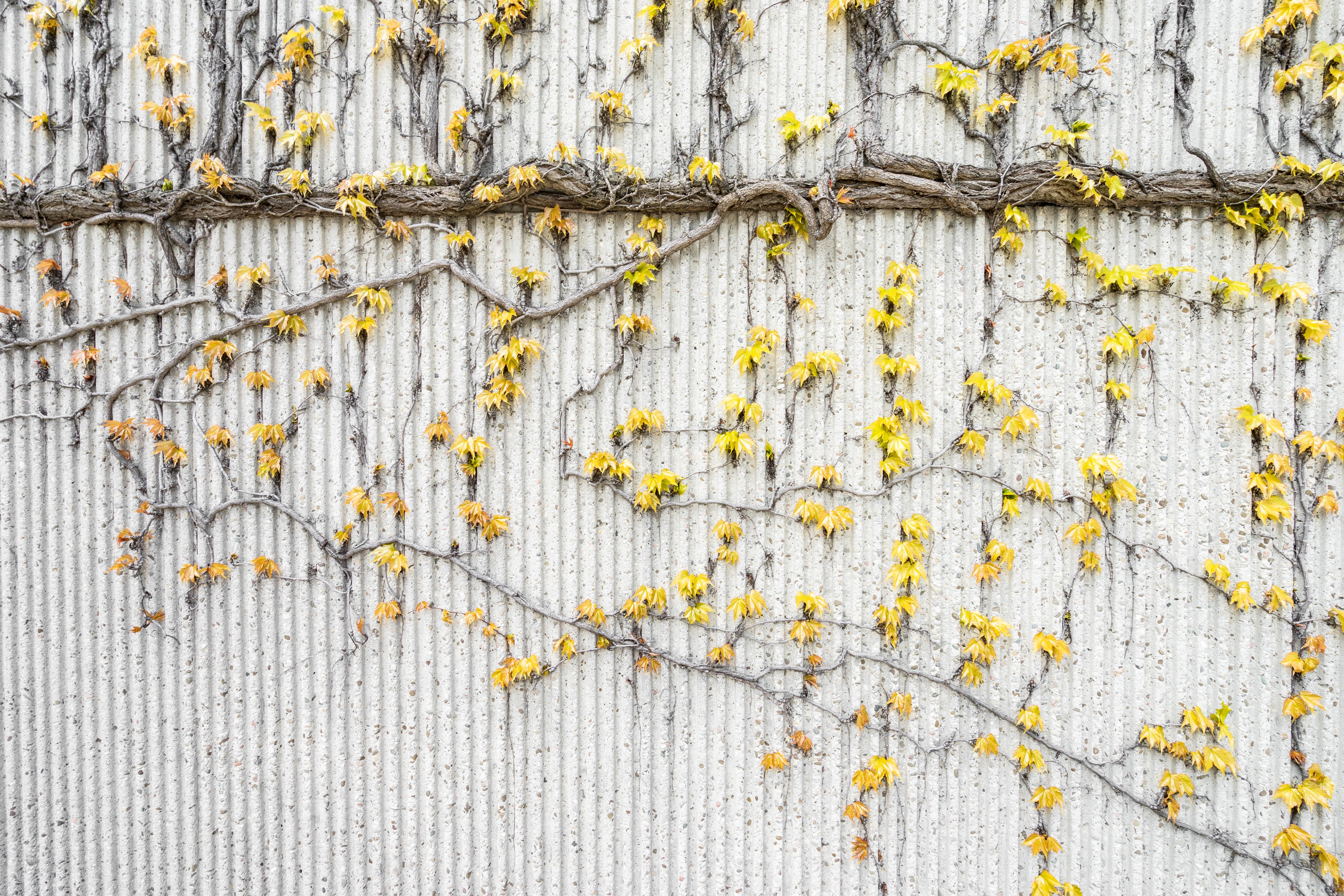 Fotos gratis : rama, textura, hoja, pared, patrón, línea, amarillo ...