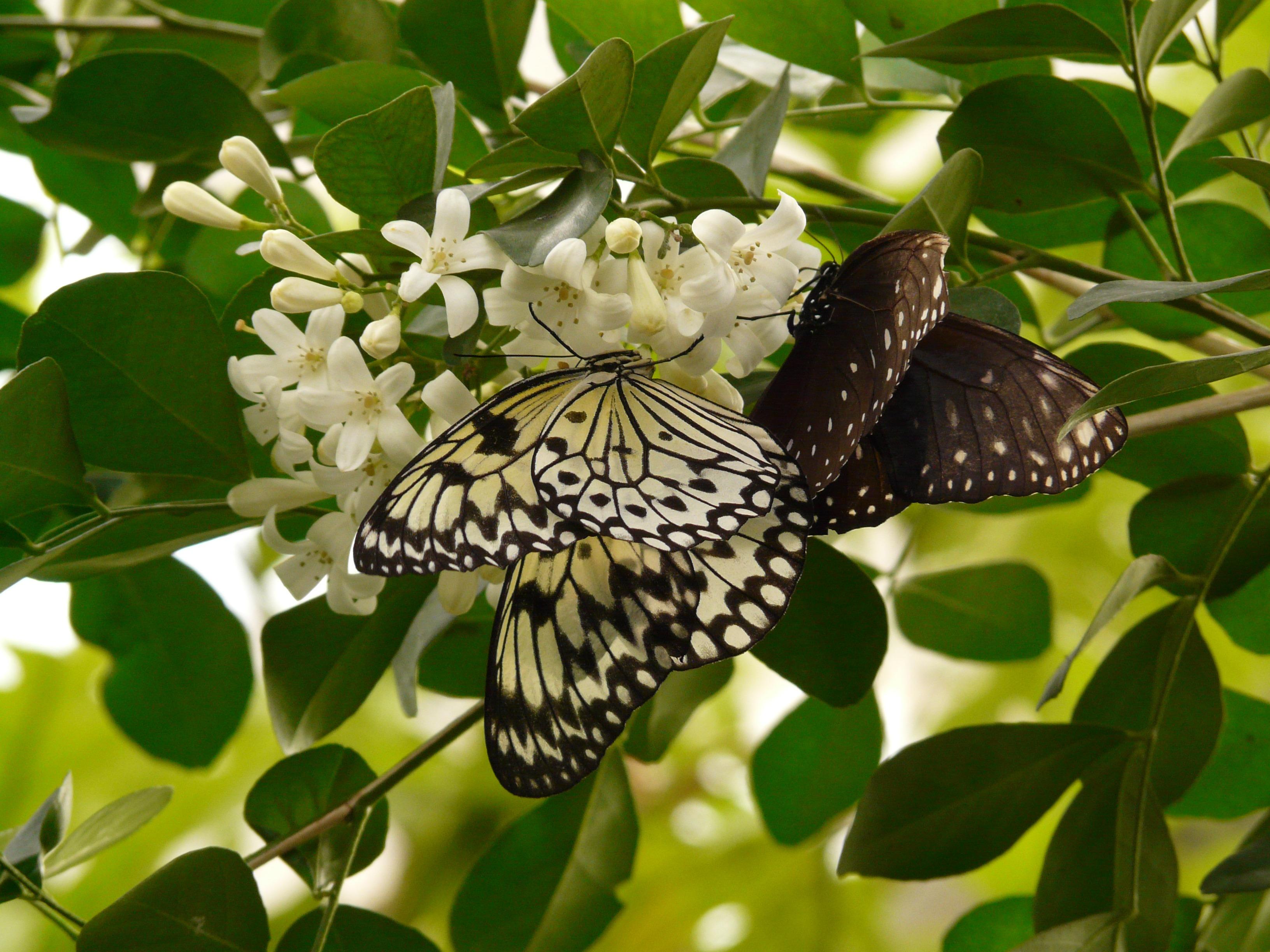 Images Gratuites Branche Fleur Tropical Insecte