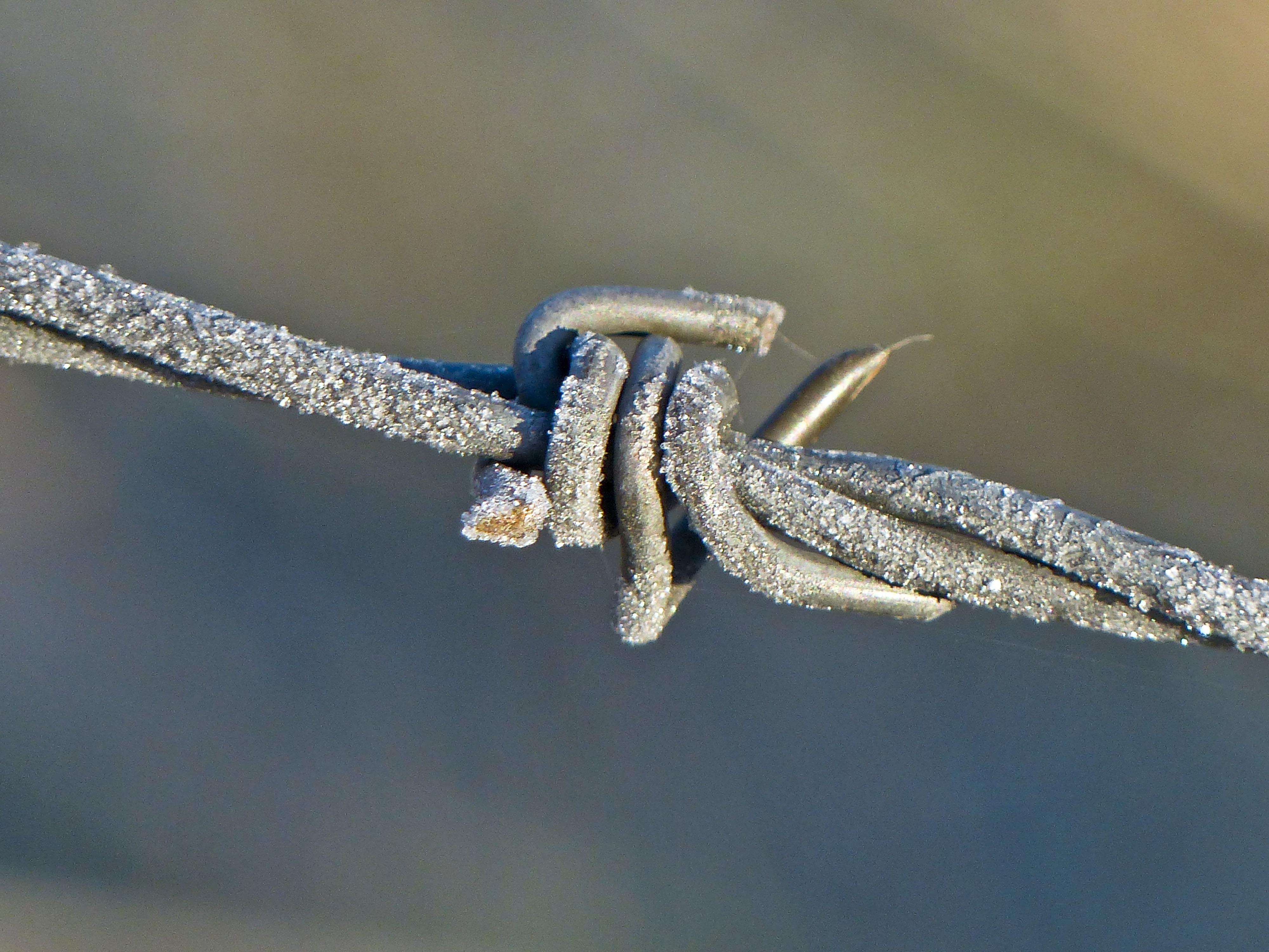 Kostenlose foto : Ast, Flügel, Zaun, Bauernhof, Frost, Draht ...