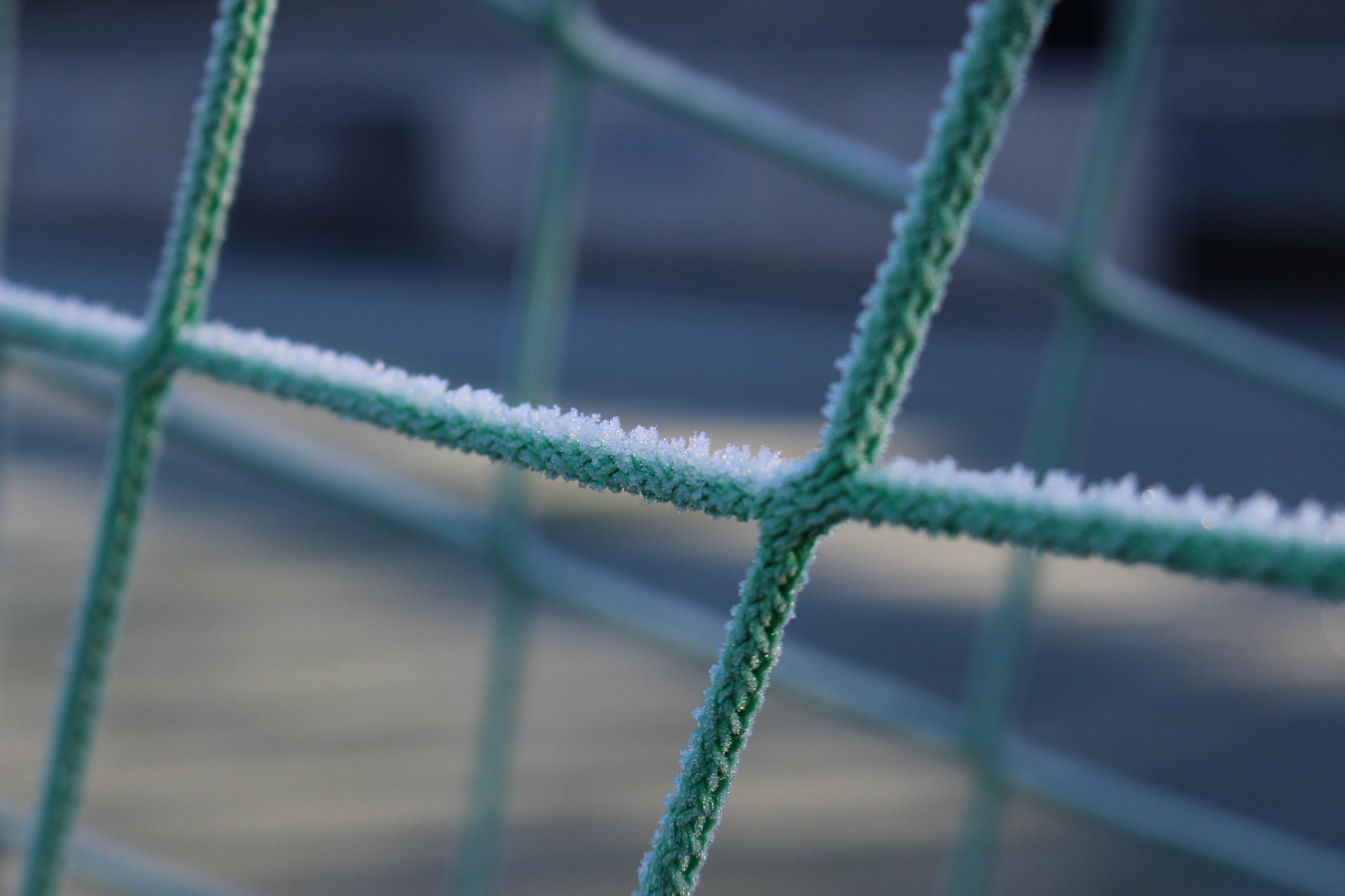 Kostenlose foto Ast Winter Zaun Blatt Linie Grün blau
