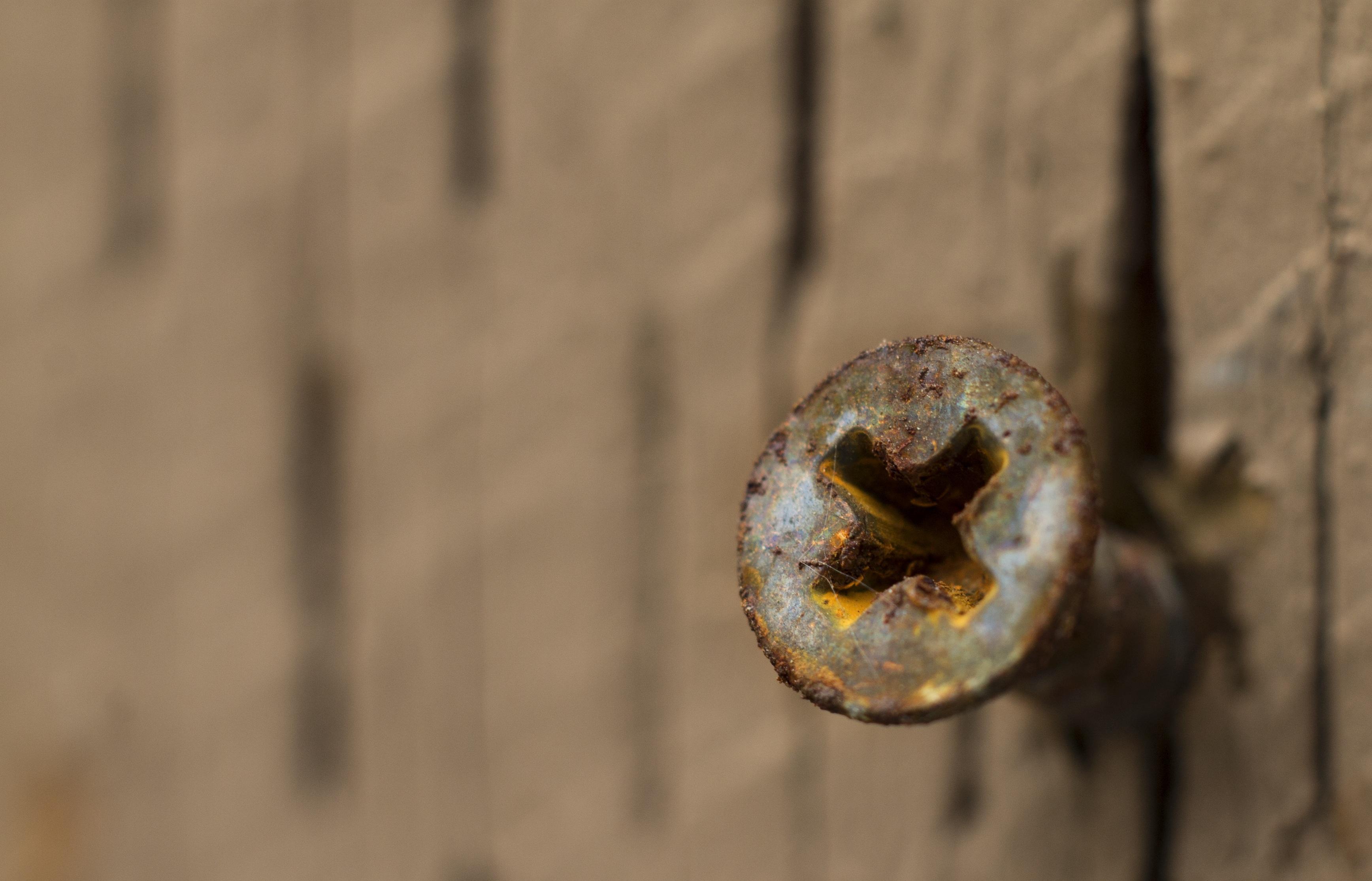 Fotos gratis : rama, fotografía, textura, hoja, flor, acero, metal ...