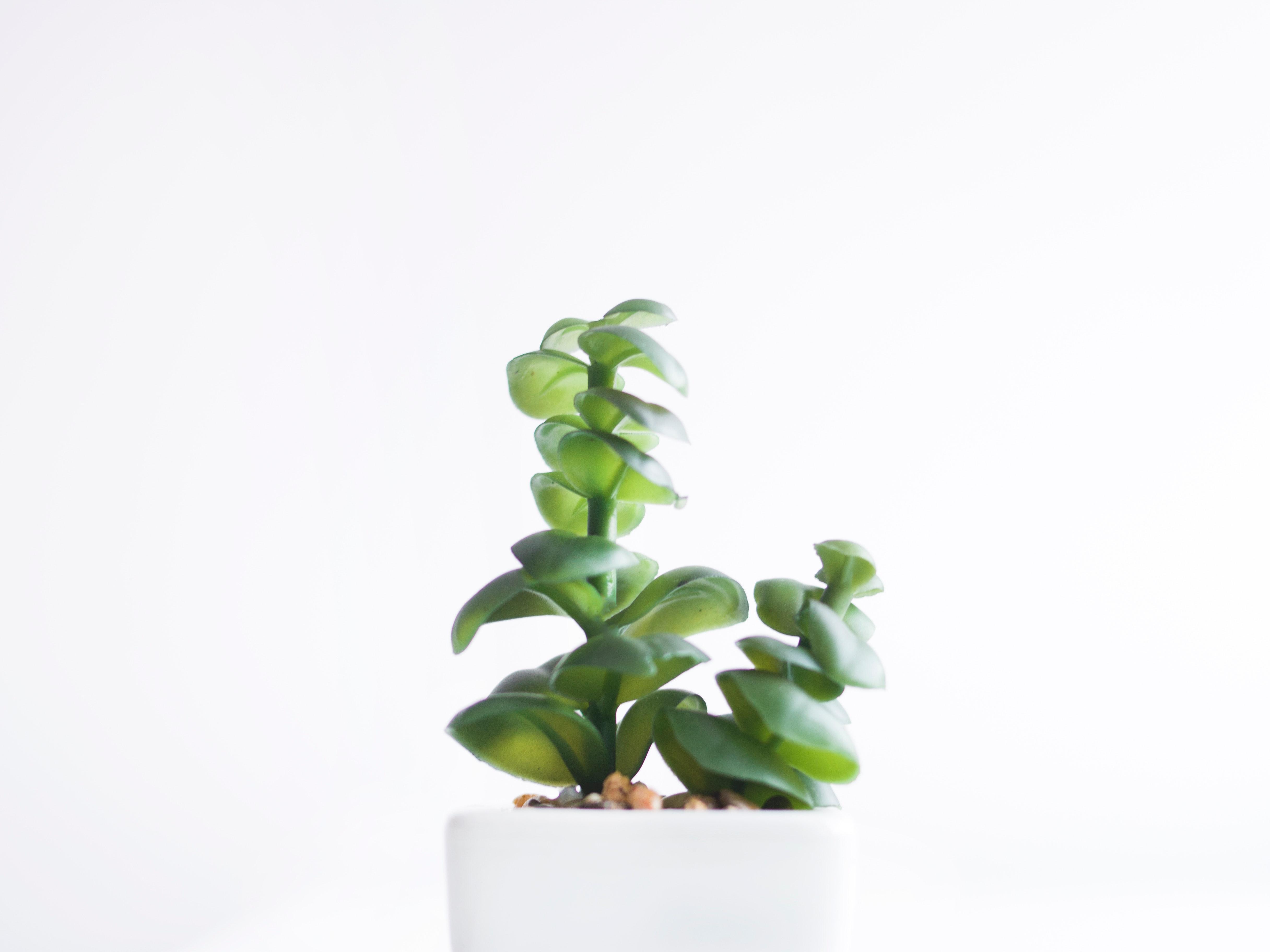 Gambar Terang Kaktus Merapatkan Dekorasi Halus