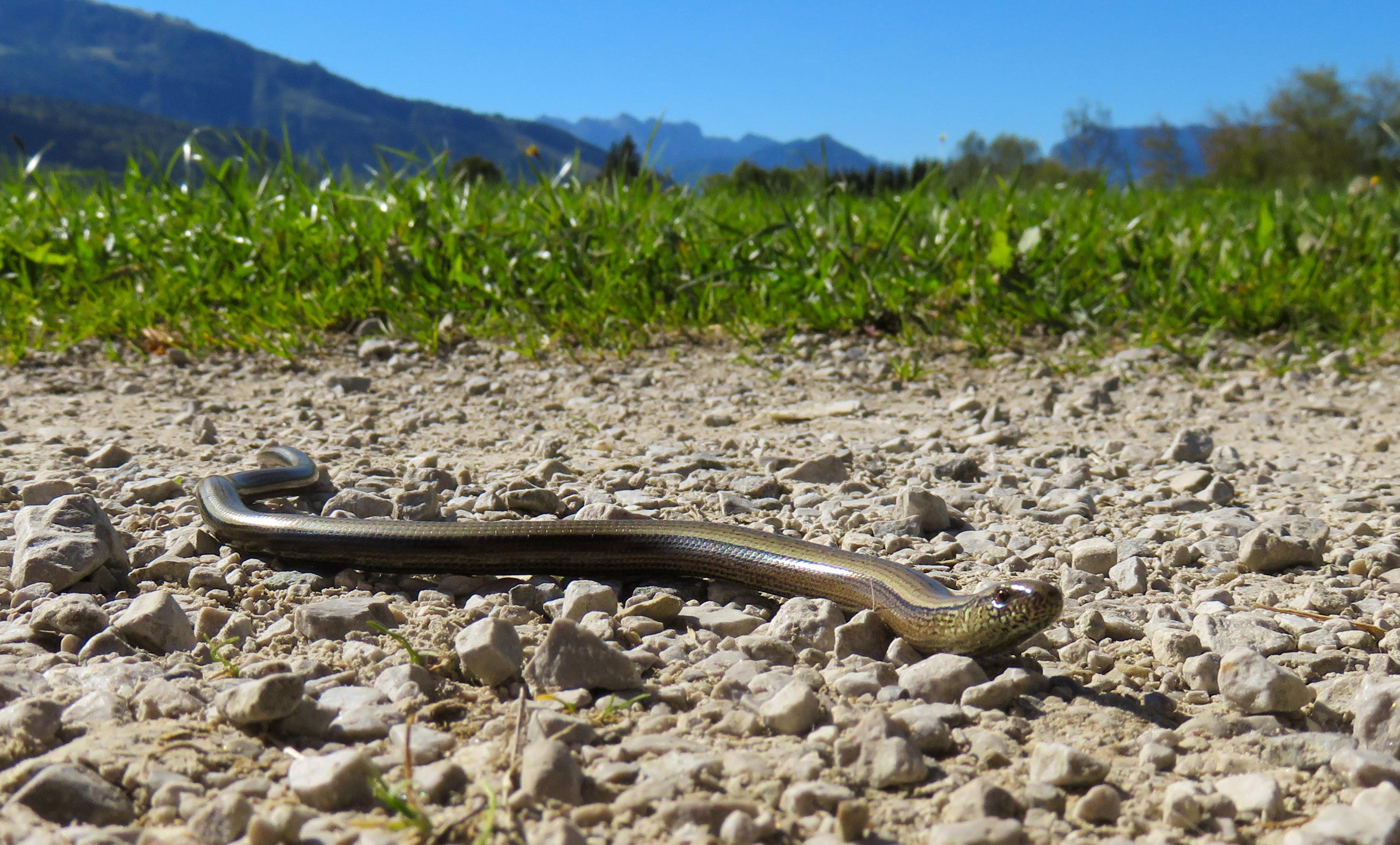 Ползущая змея картинки